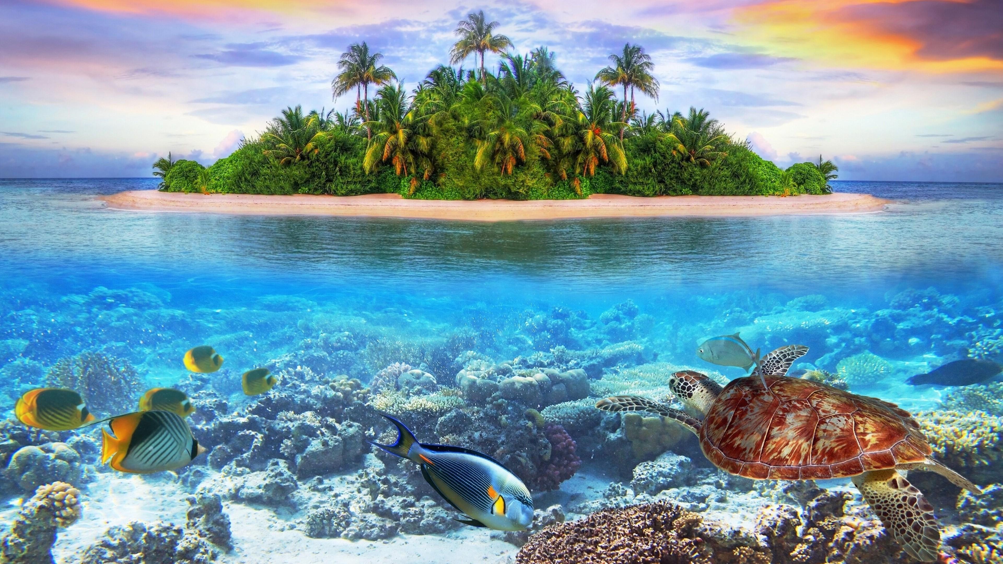 Great Barrier Reef Turtle 4k Wallpapers Wallpaper Cave
