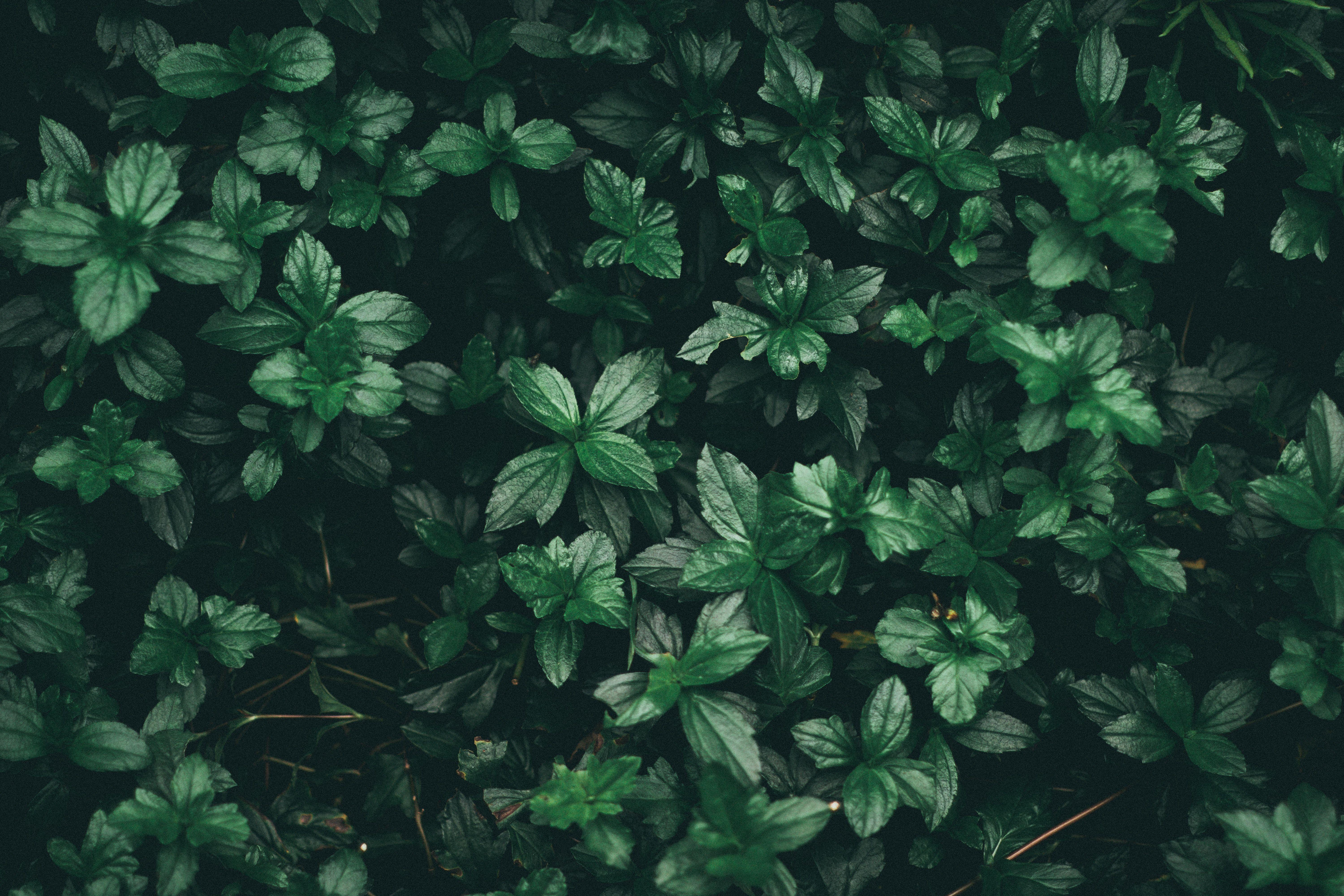 Green Aesthetic Computer Wallpapers Wallpaper Cave Find over 100+ of the best free tropical leaves images. wallpaper cave