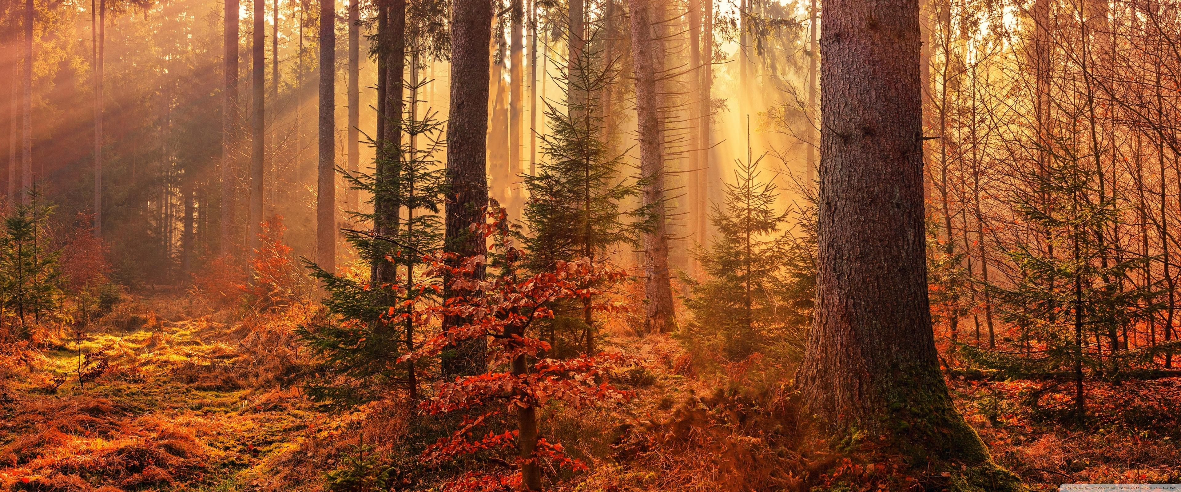 Autumn Forest Path Wallpapers Wallpaper Cave