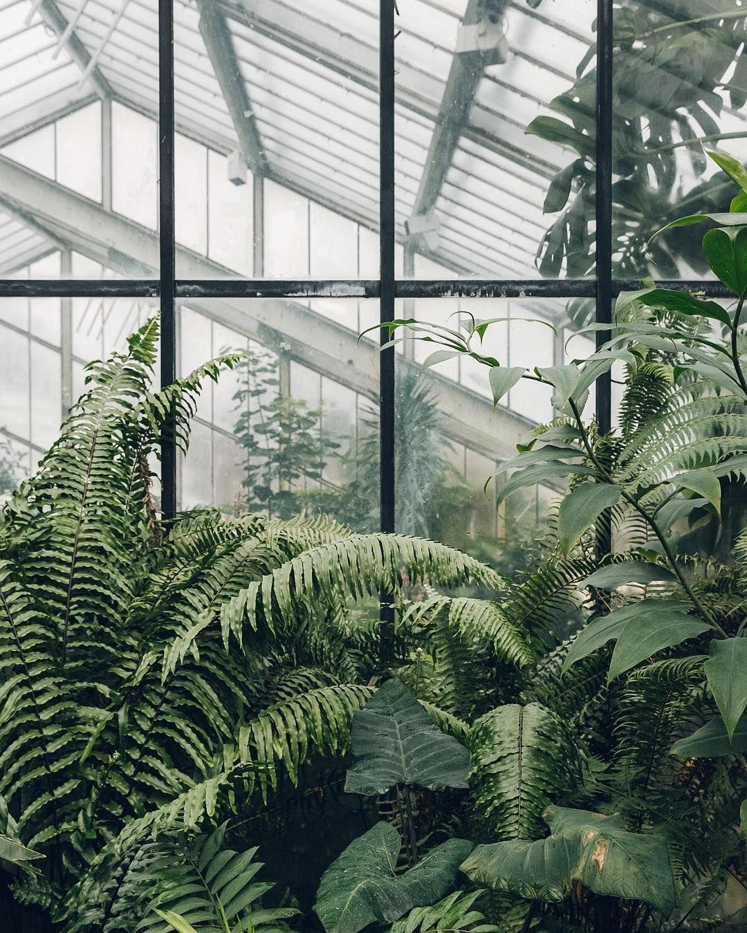 plants aesthetic wallpapers