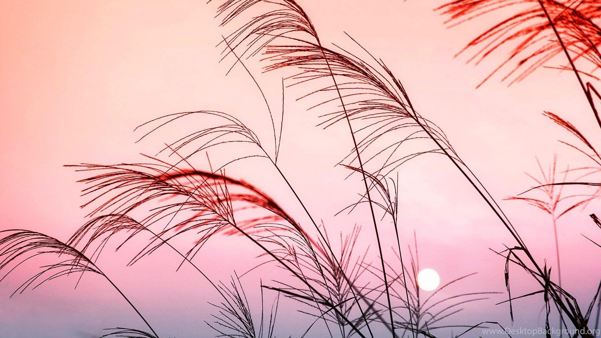 aesthetic pastel desktop wallpapers