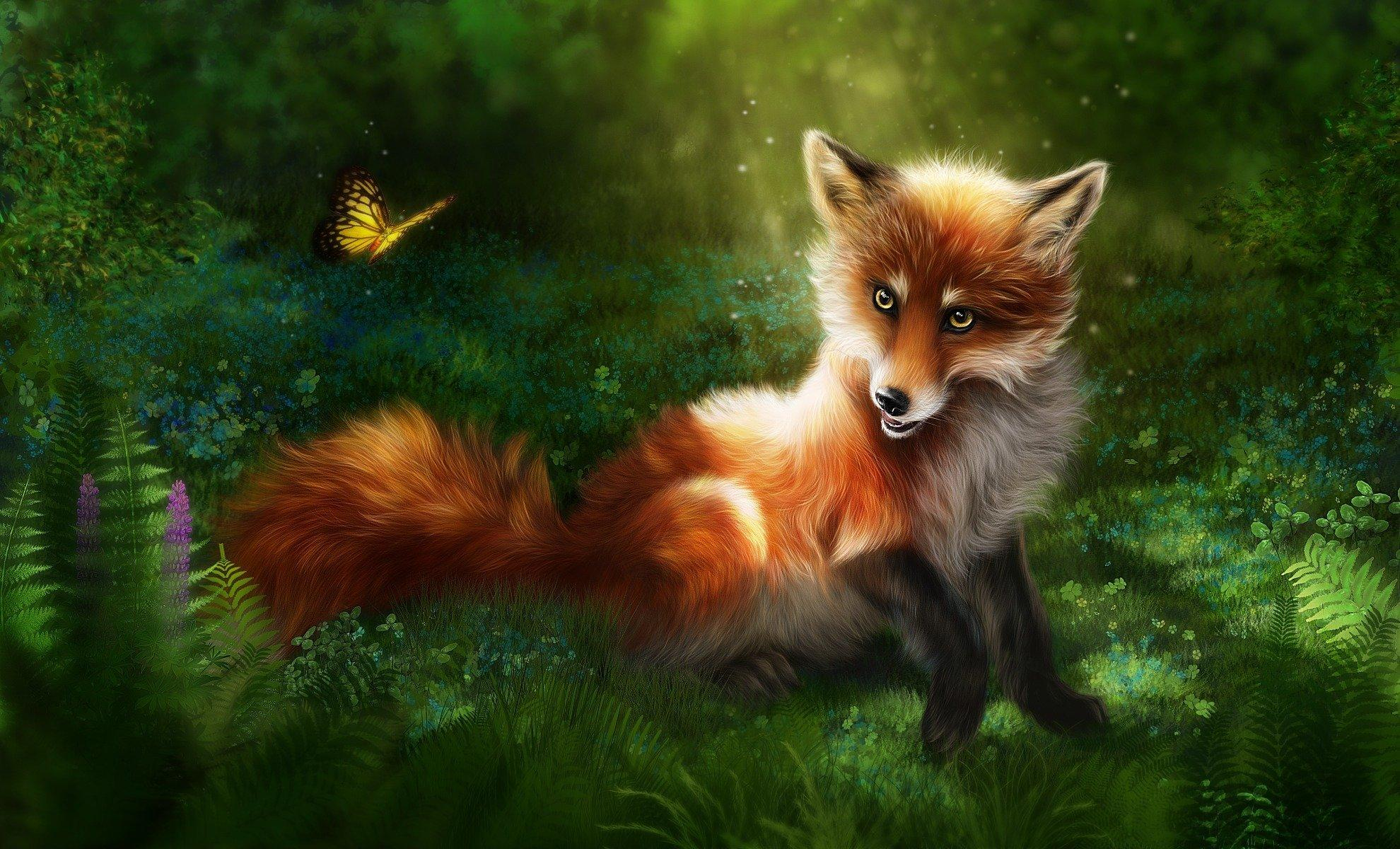 Fox And Butterfly Wallpapers Wallpaper Cave