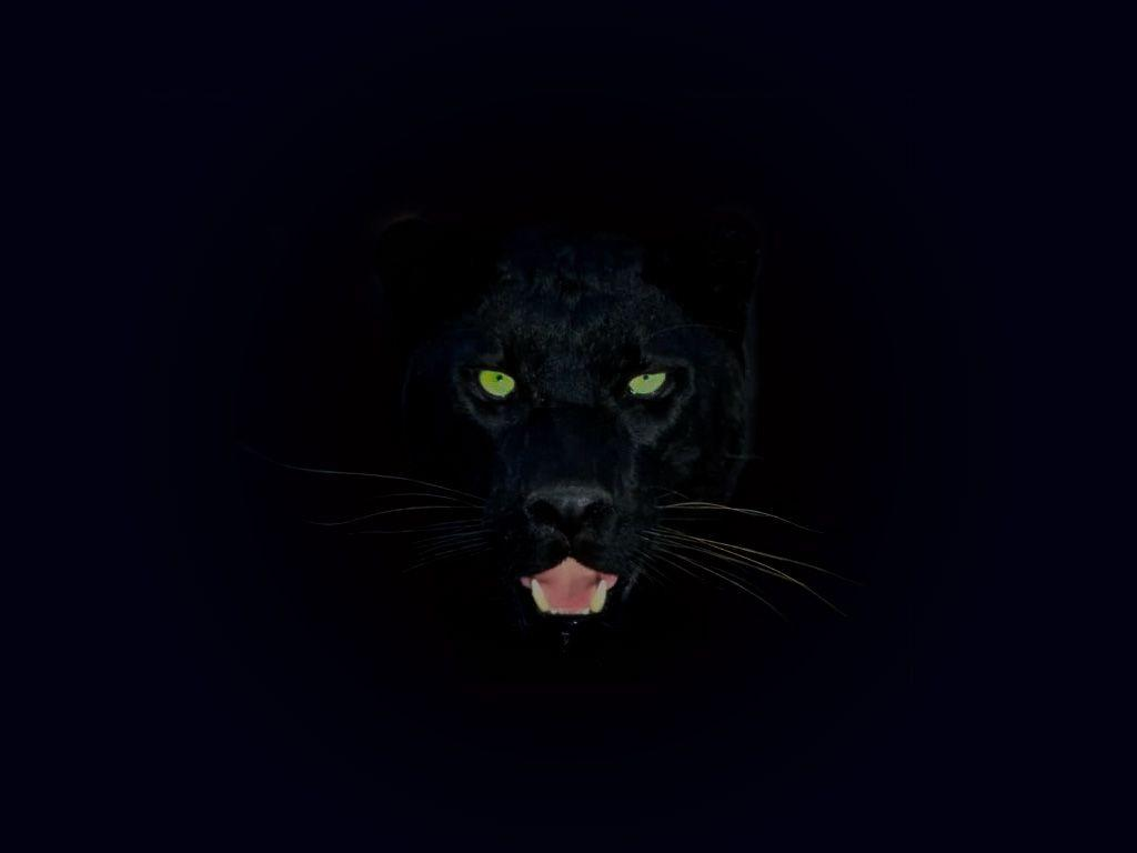 Black Panther Aesthetic Animal Wallpapers Wallpaper Cave