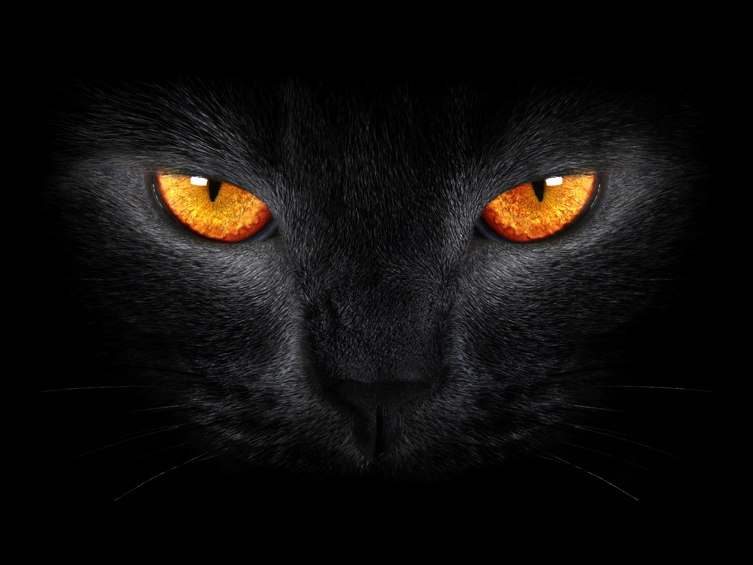 Scary Cats Wallpapers Wallpaper Cave