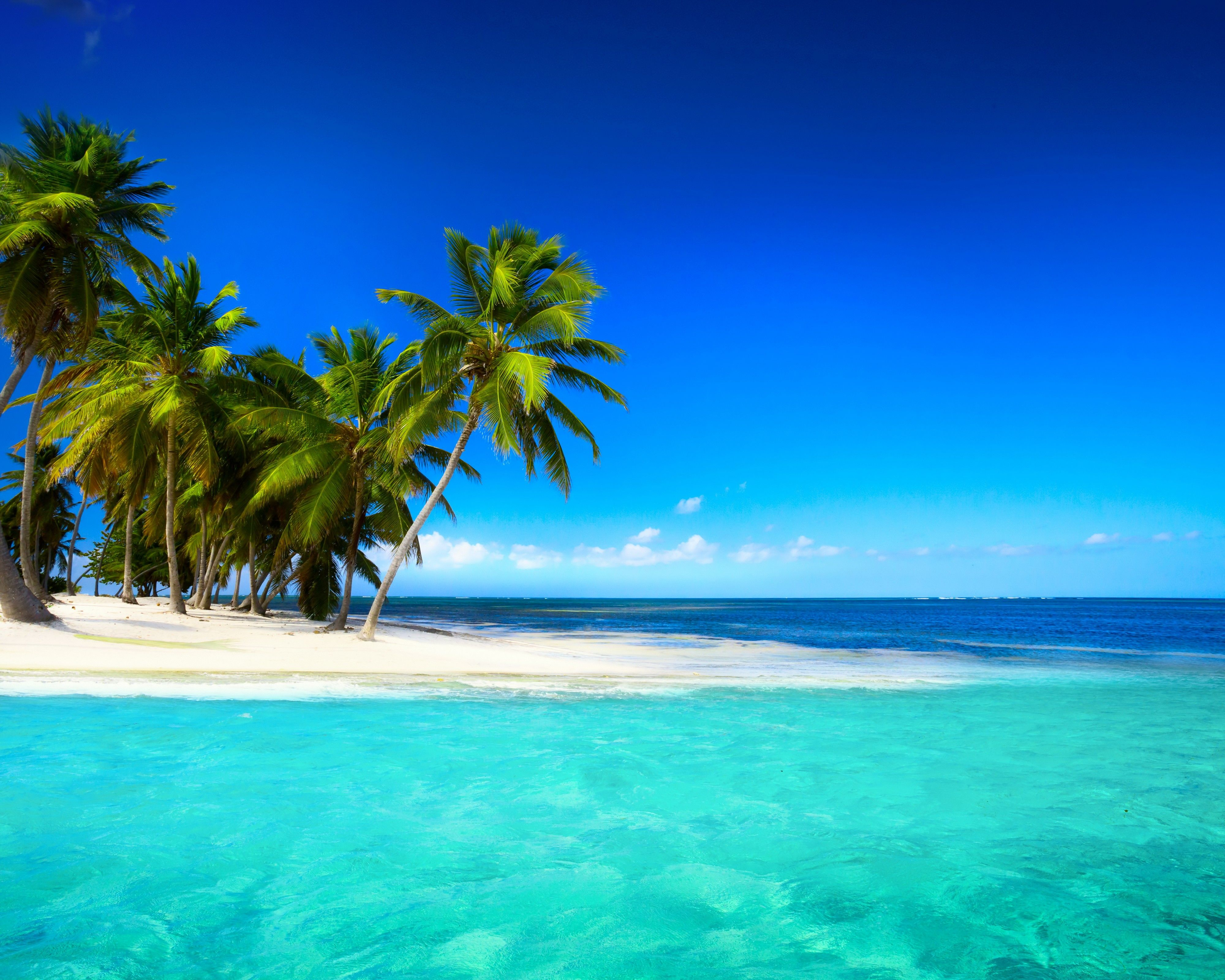 Palm Trees Tropical Island Wallpapers Wallpaper Cave