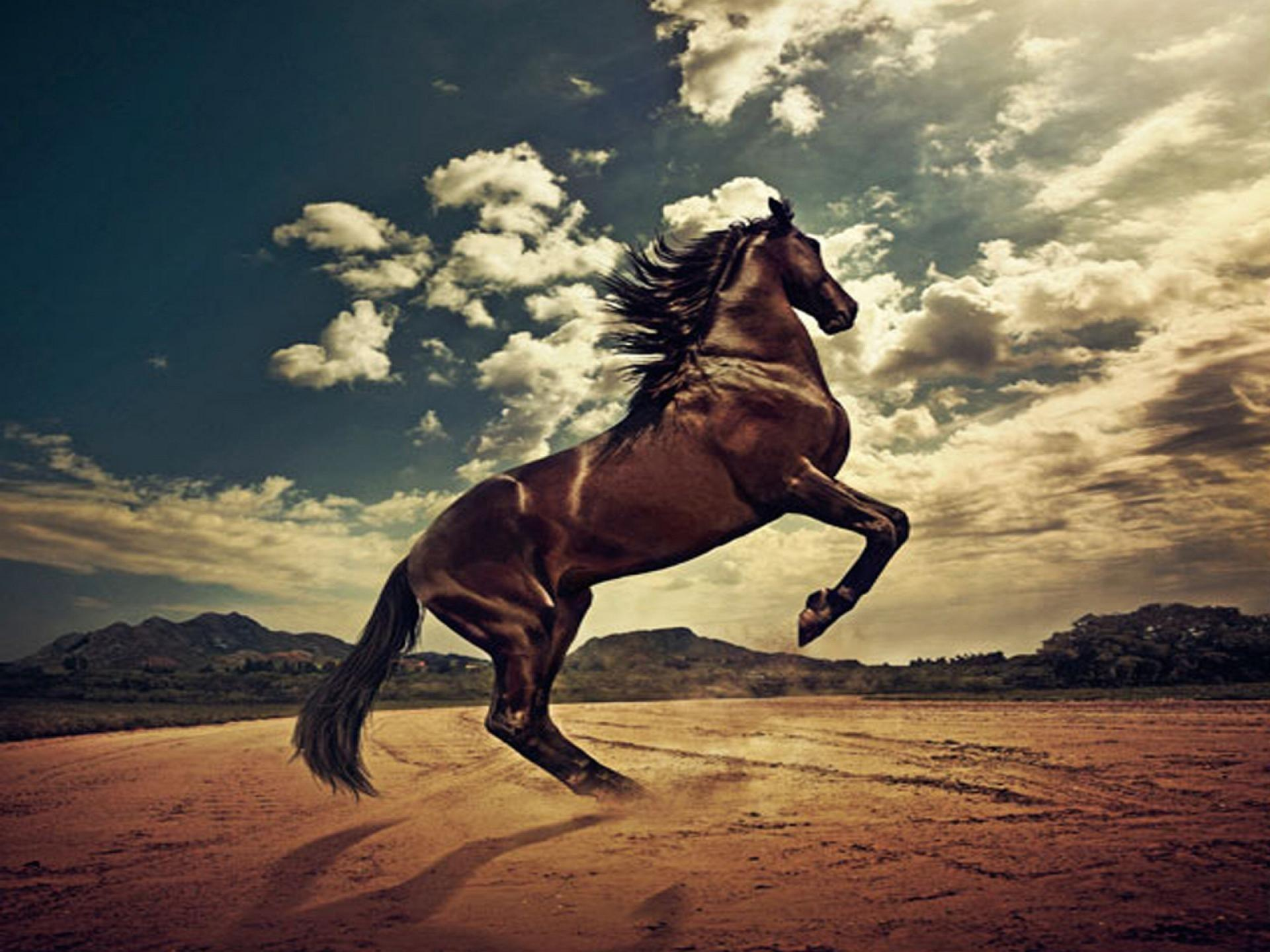 Horses Stallions Wallpapers Wallpaper Cave