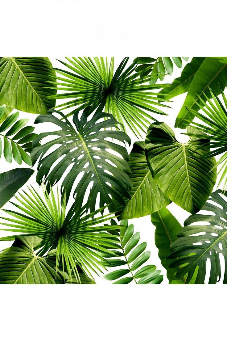 Aesthetic Leaves Wallpapers Wallpaper Cave 700 x 1149 jpeg 182 кб. aesthetic leaves wallpapers wallpaper