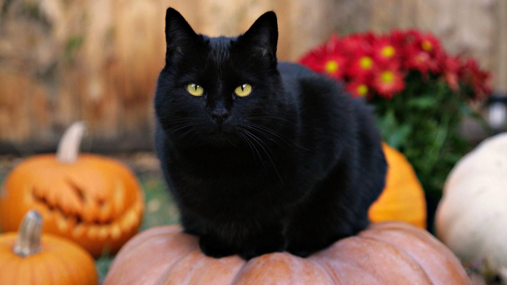Black Kitten And Halloween Pumpkins Wallpapers Wallpaper Cave