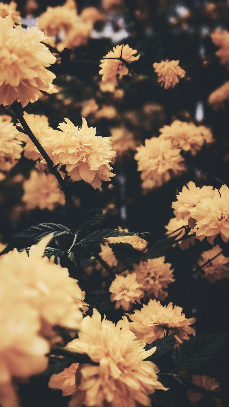 Yellow Aesthetic Flowers Wallpapers , Wallpaper Cave