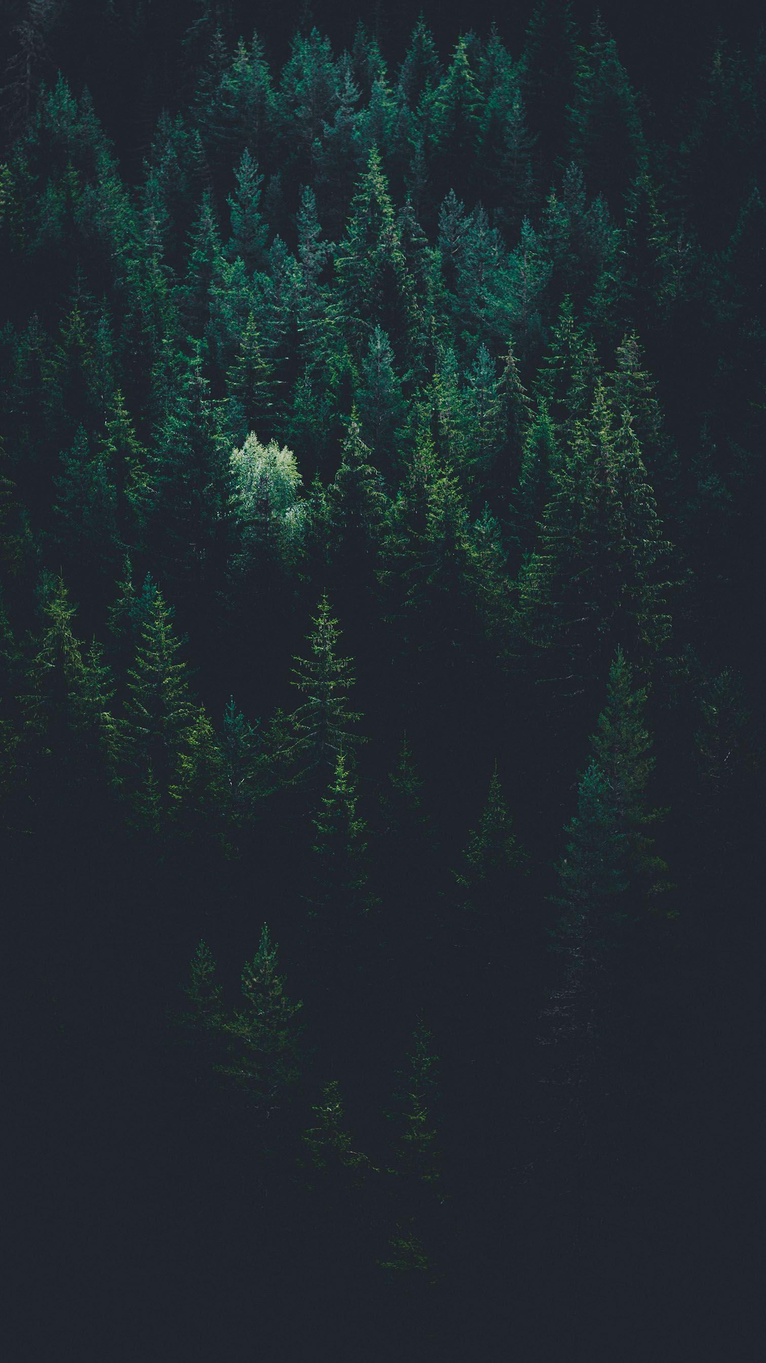 Iphone 11 Hd 4k Forest Wallpapers Wallpaper Cave