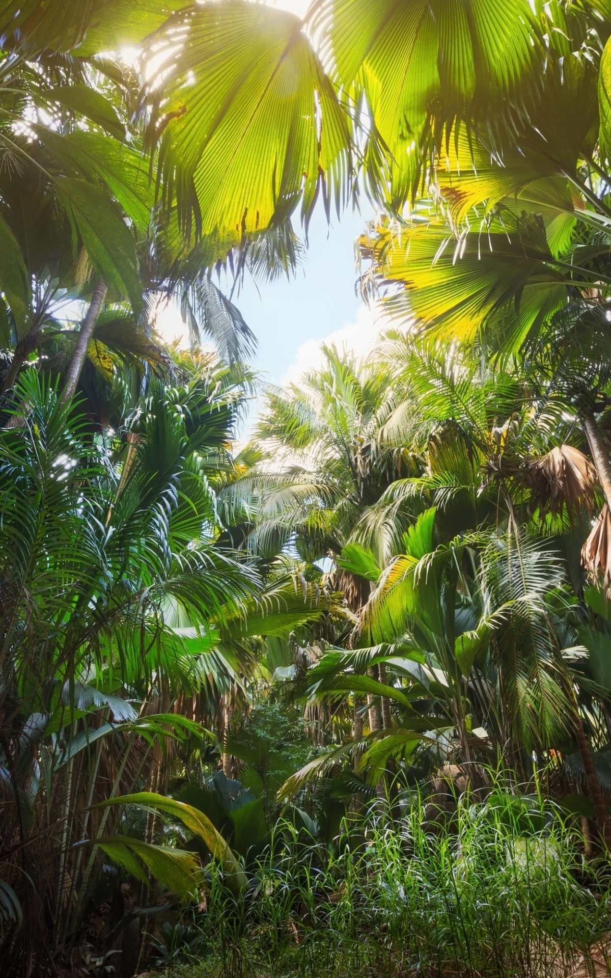 Mobile Jungle Wallpapers Wallpaper Cave