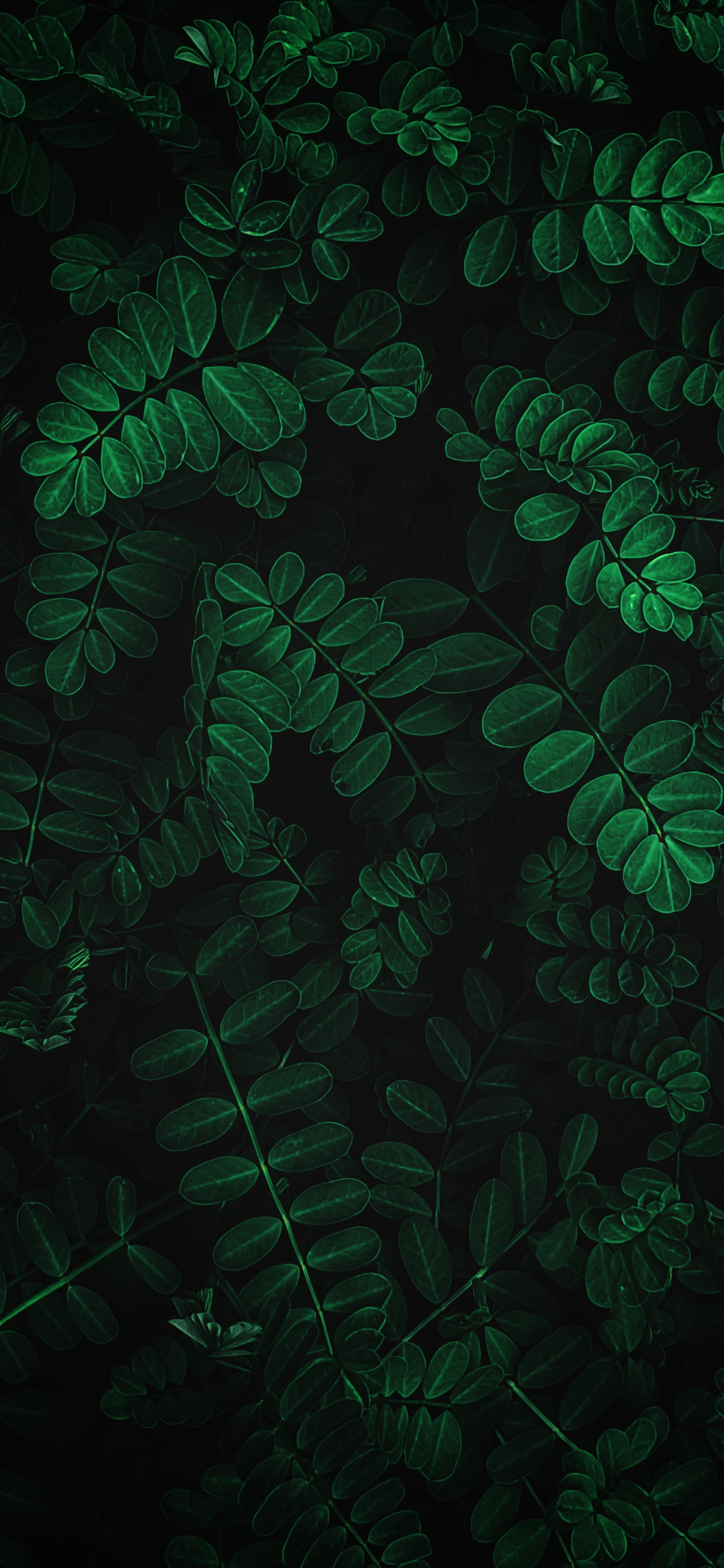 Nature Iphone 11 Wallpapers Wallpaper Cave
