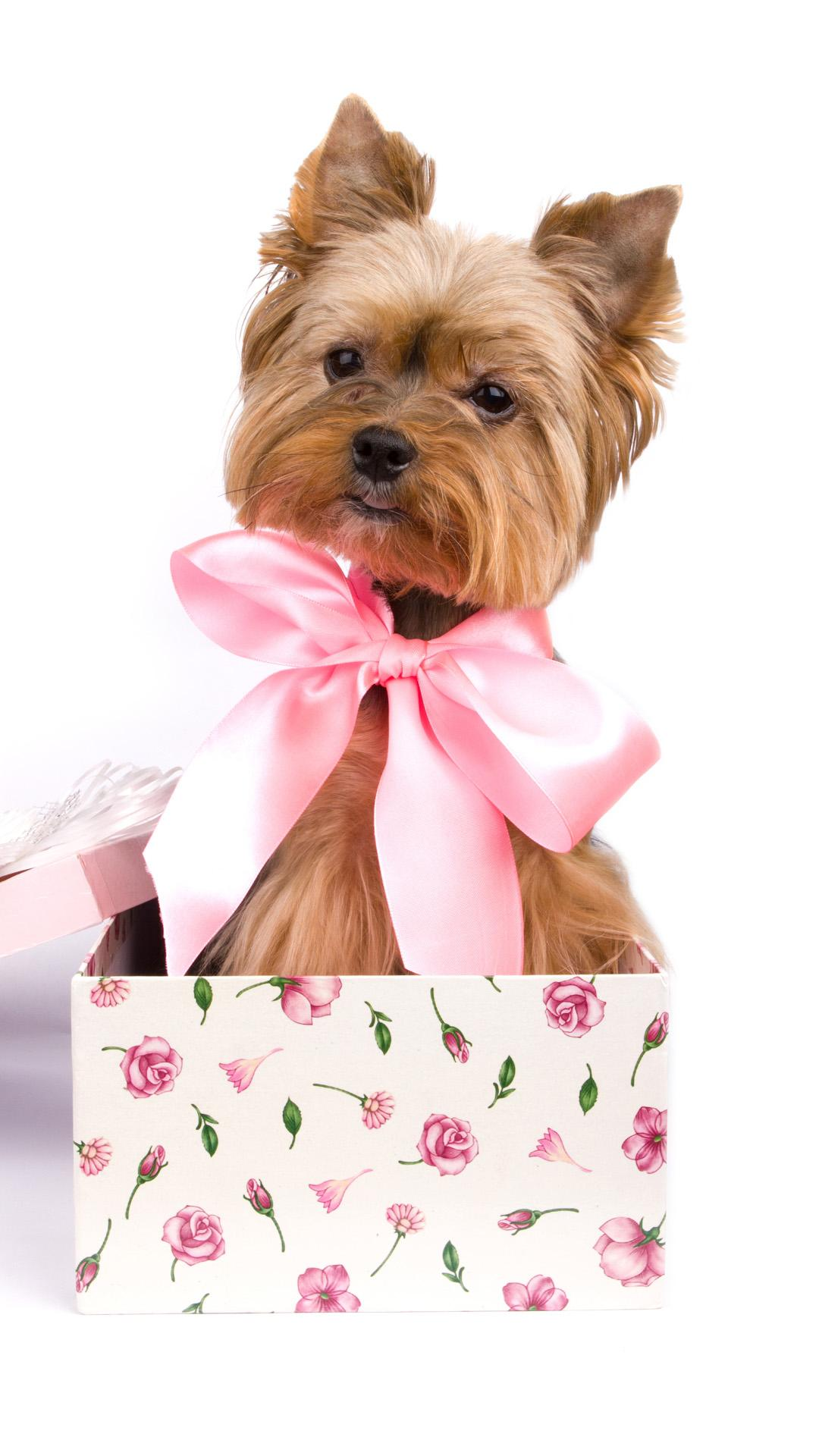 Puppy Gift Wallpapers Wallpaper Cave