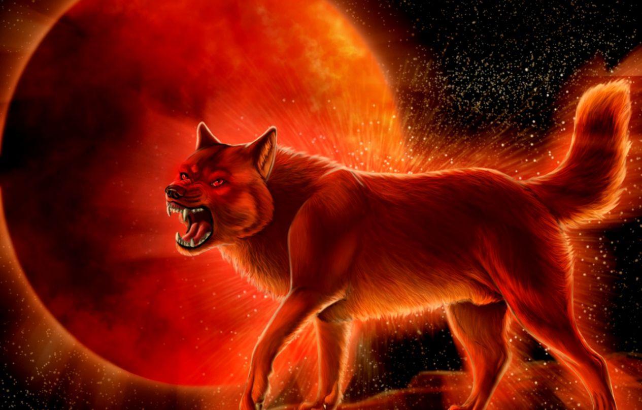 Red Wolf Desktop Wallpapers Wallpaper Cave