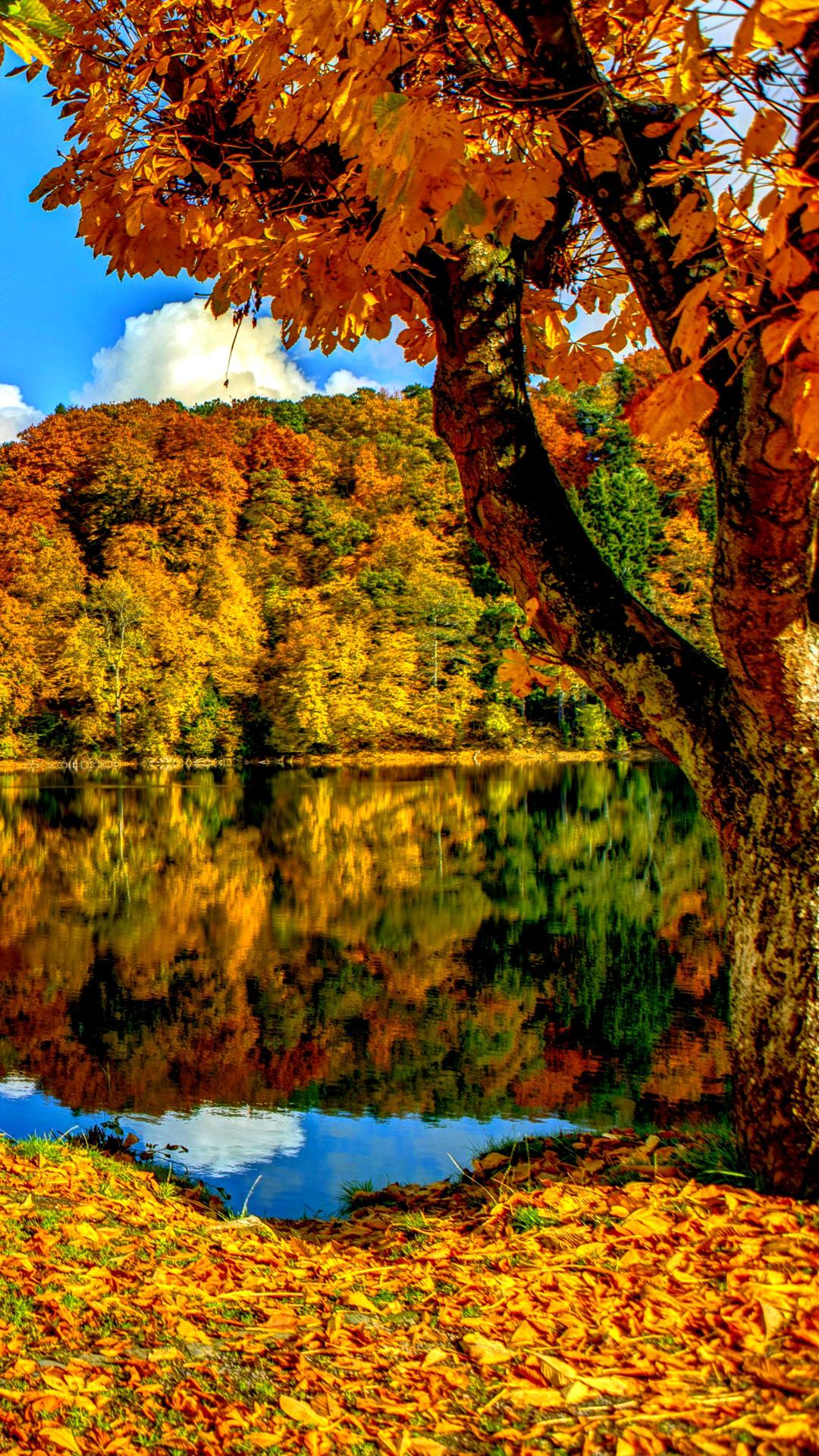 foto de A Fall Tree Wallpapers - Wallpaper Cave
