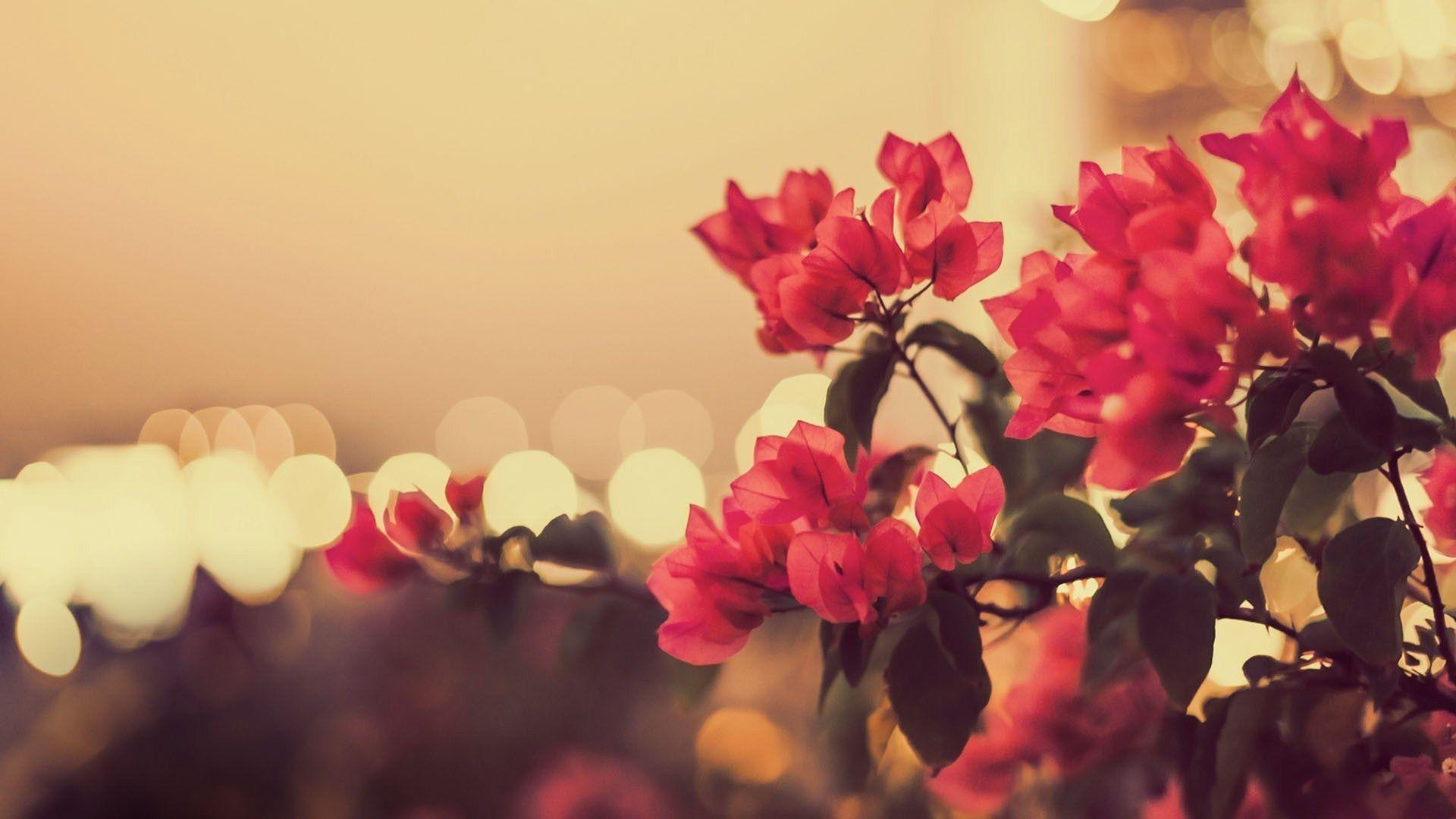 Flower Vintage Wallpapers Wallpaper Cave