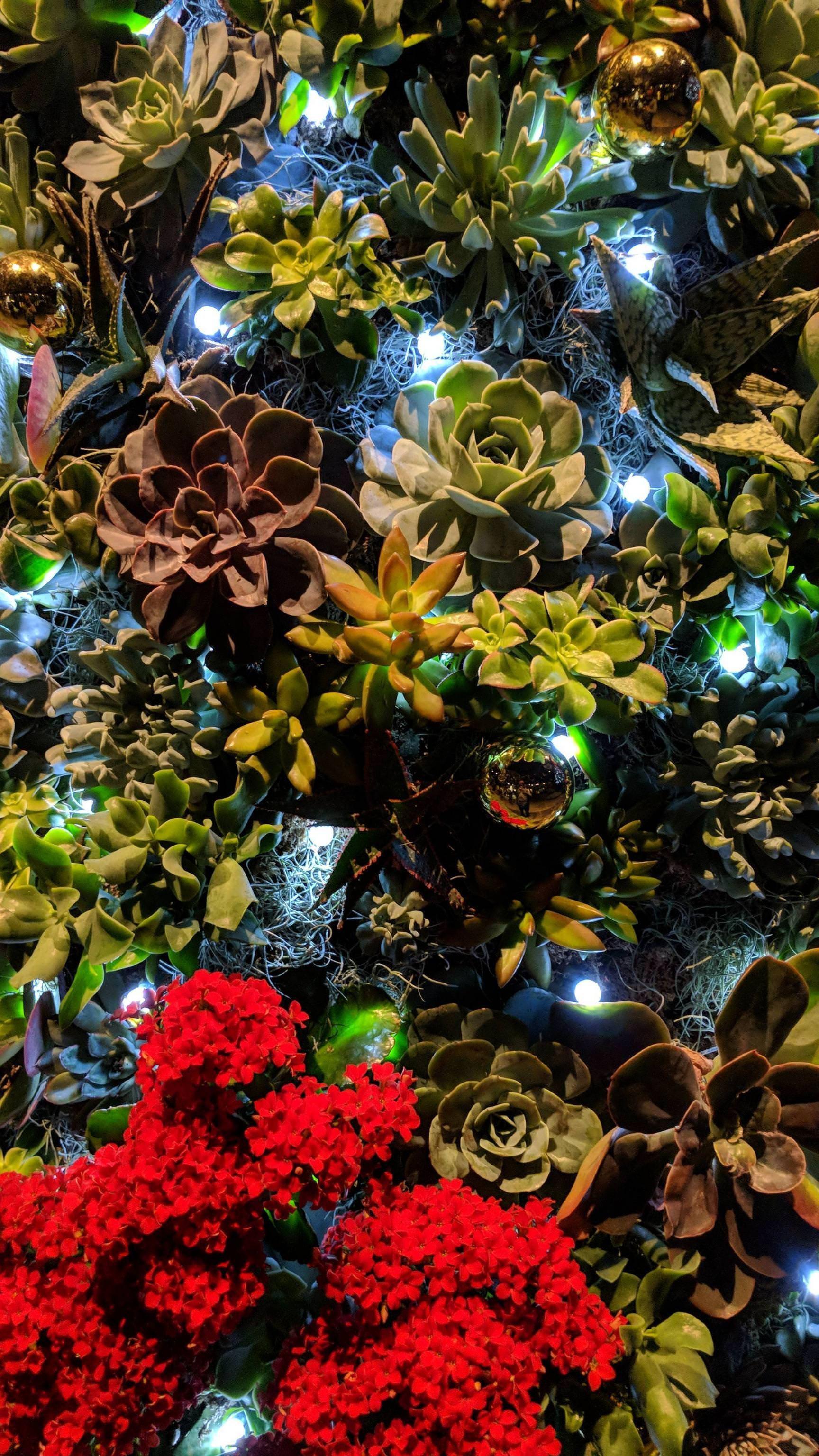 Succulent Iphone Wallpapers Wallpaper Cave