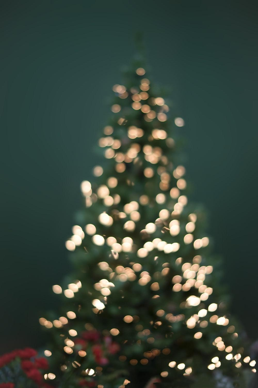 900+ Christmas Tree Image: Download HD Pictures & Photos on