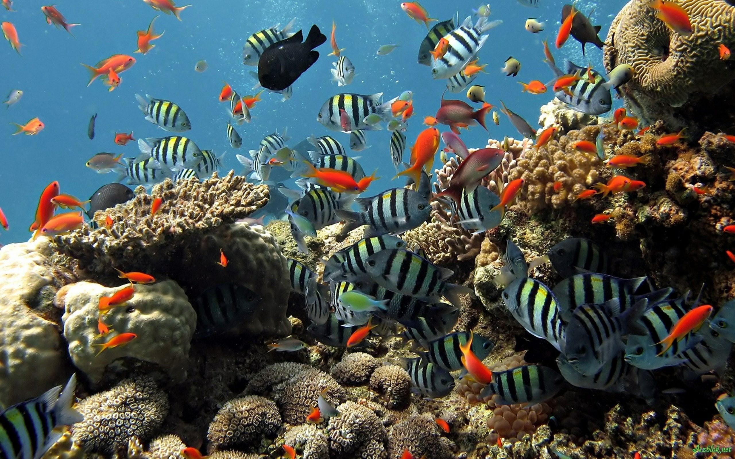 Aquarium Computer Wallpapers   Wallpaper Cave