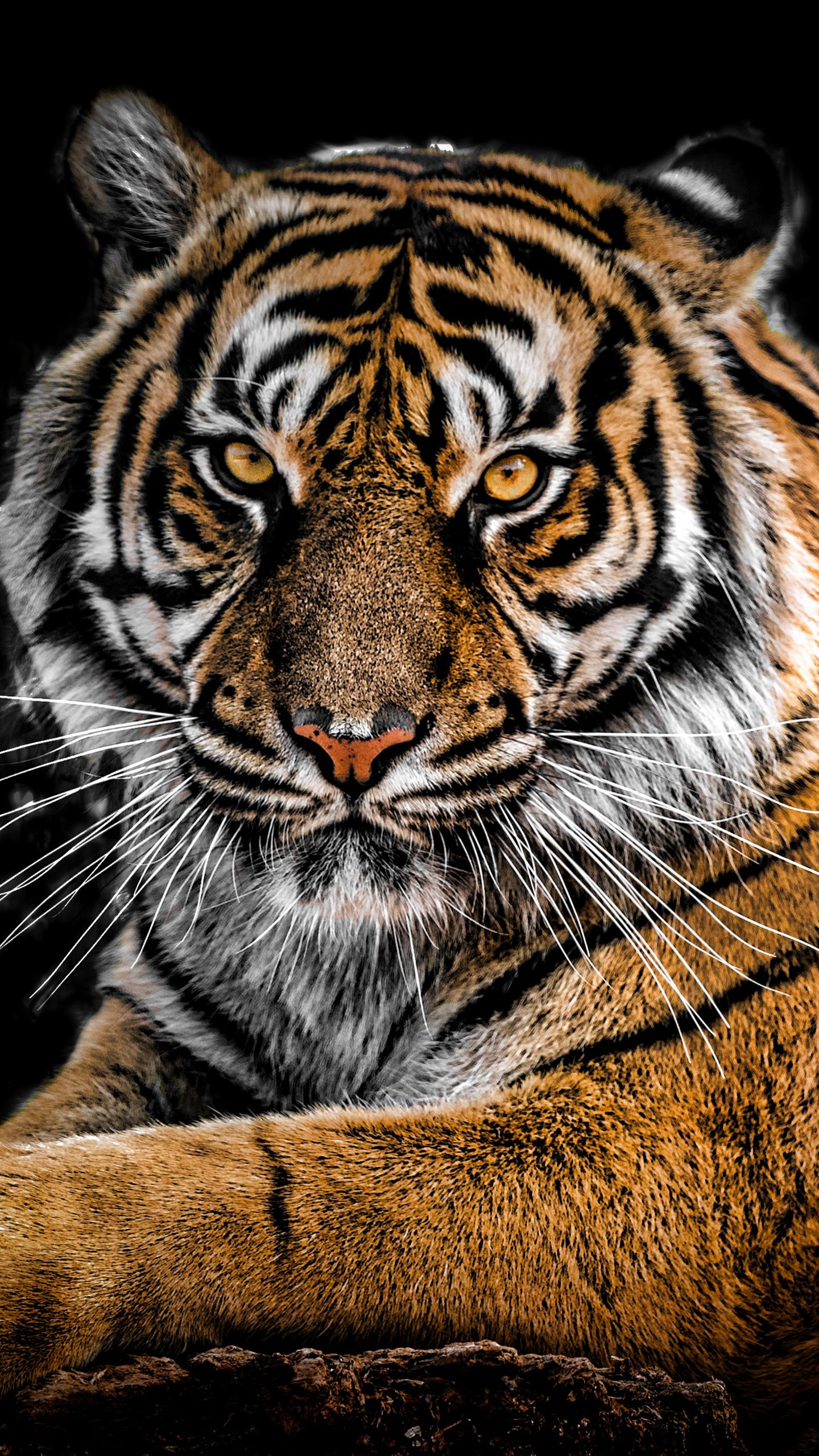 Uhd Mobile Tiger Wallpapers Wallpaper Cave