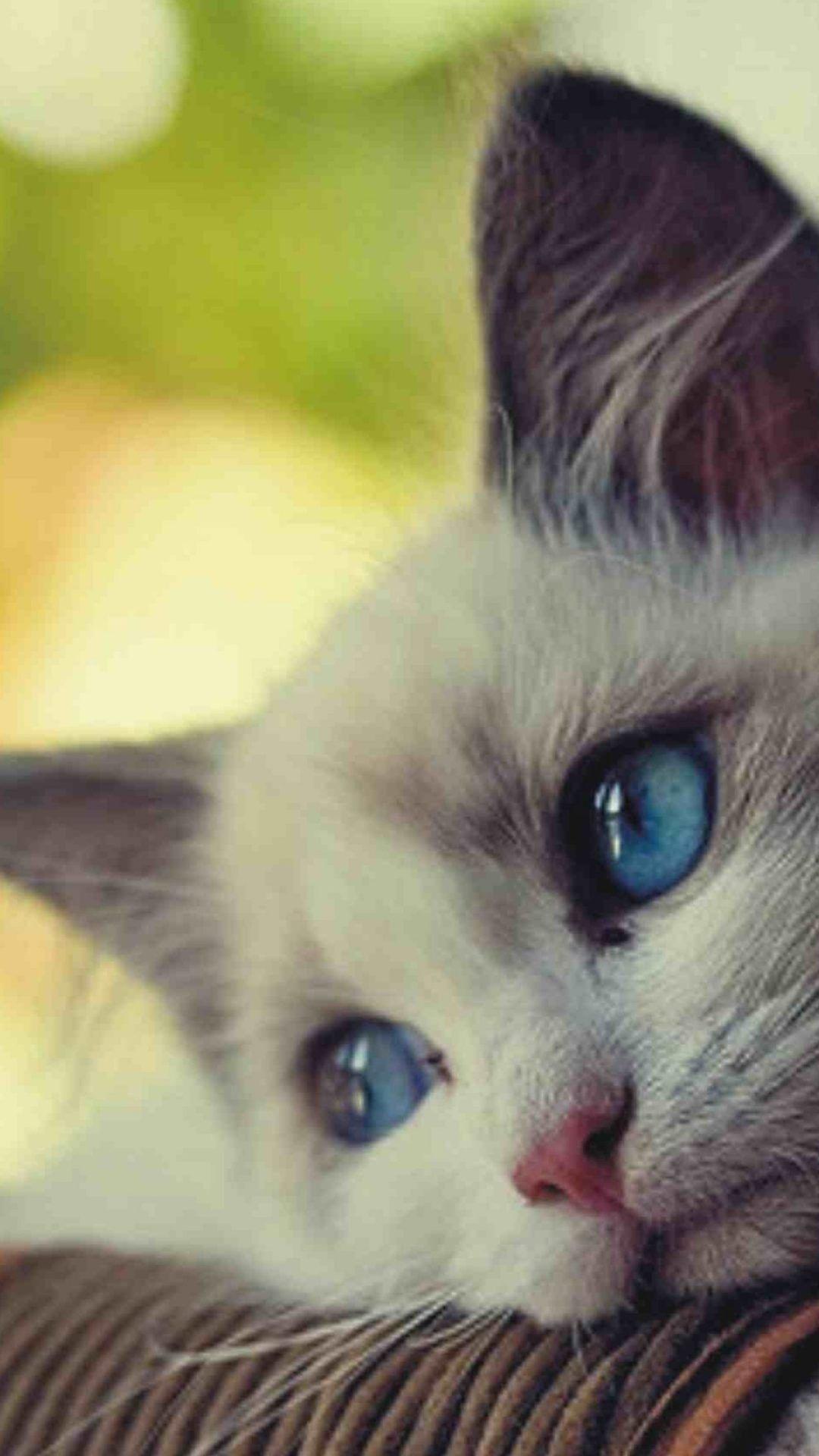 imágenes de gatitos tristes - Sad 8K Wallpapers