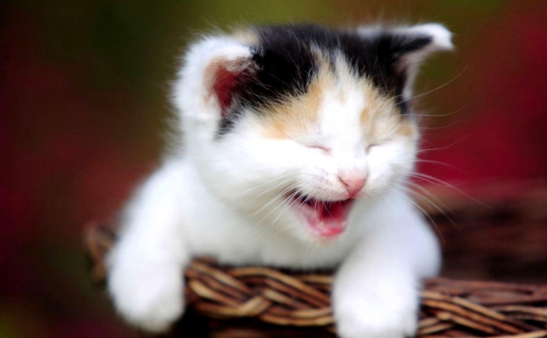 imágenes de gatitos tristes - Cute Smiling Cat Wallpapers Hd