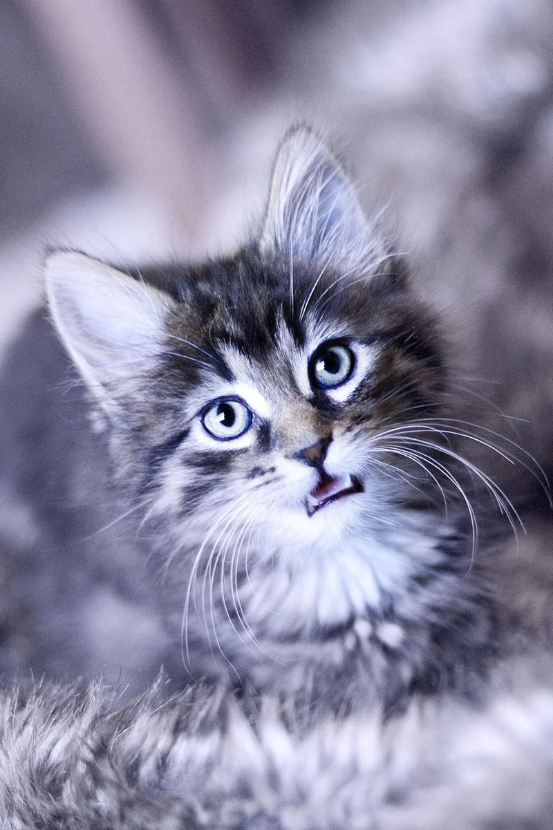 imágenes de gatitos tristes - Download wallpapers 800x1200 kitten, crying, face, furry, cat