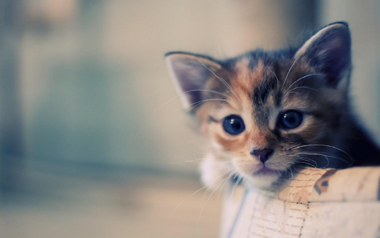 imágenes de gatitos tristes -  Cat Backgrounds Pictures