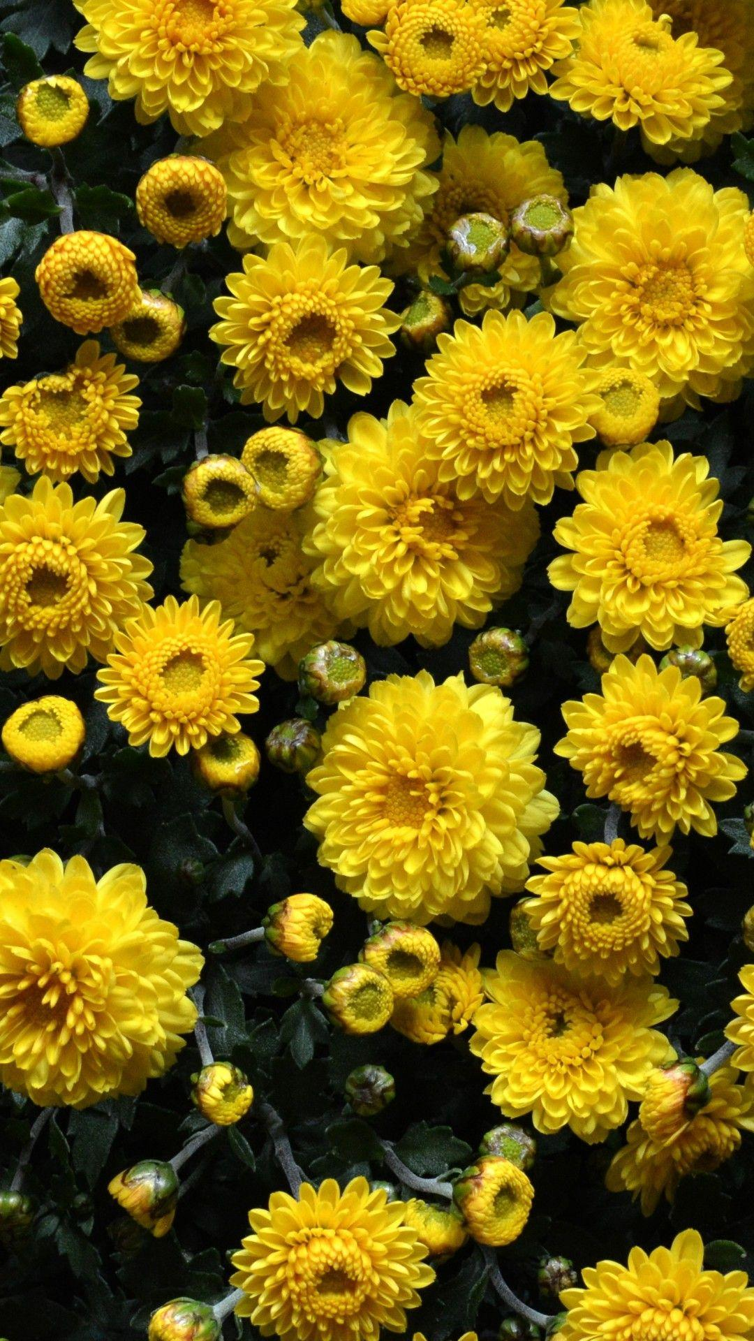 Iphone Yellow Flower Wallpapers Wallpaper Cave