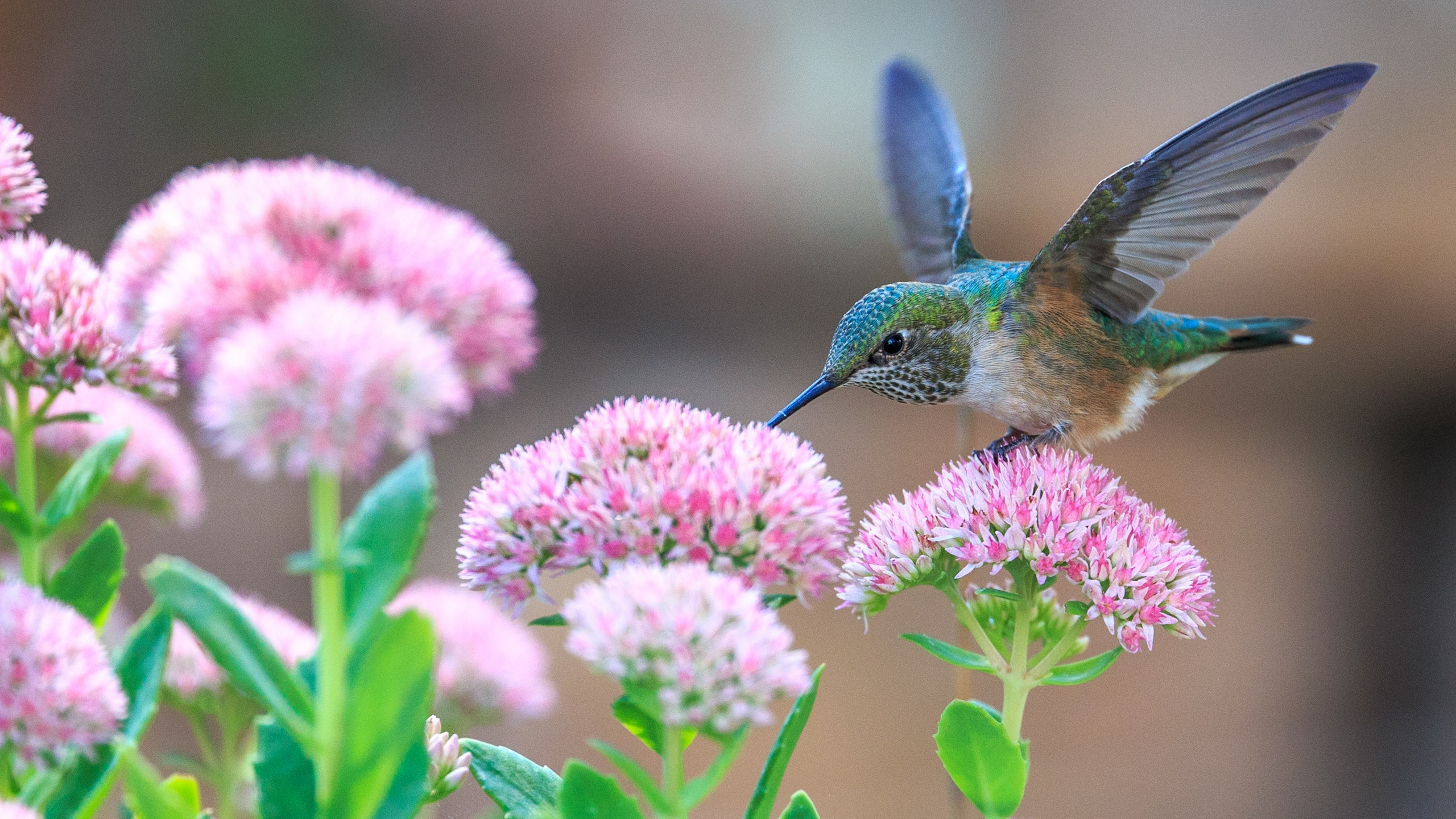Bird With Flowers Wallpapers Wallpaper Cave Download and share awesome cool background hd mobile phone wallpapers. flowers wallpapers wallpaper cave