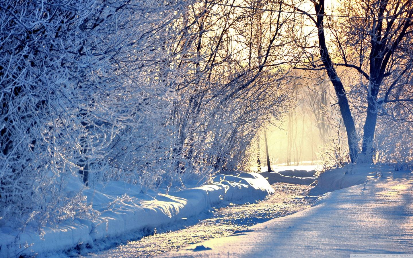 Free Winter Background, Widescreen Winter Wallpaper,