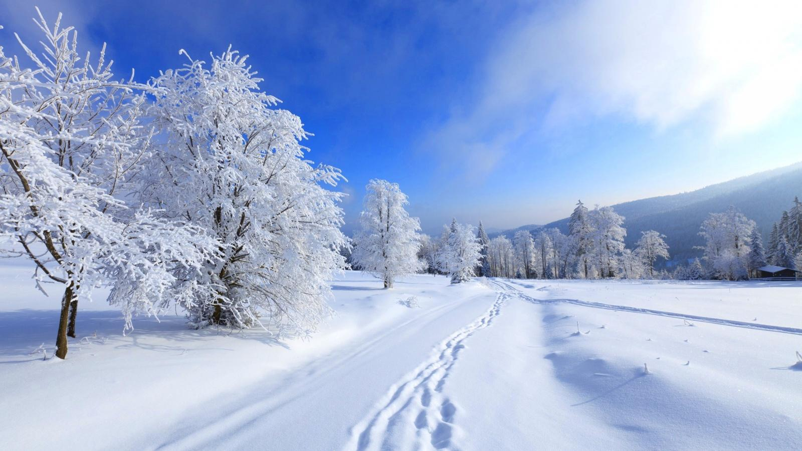 Winter Wallpapers Laptop, White Tree Winter Wallpaper,