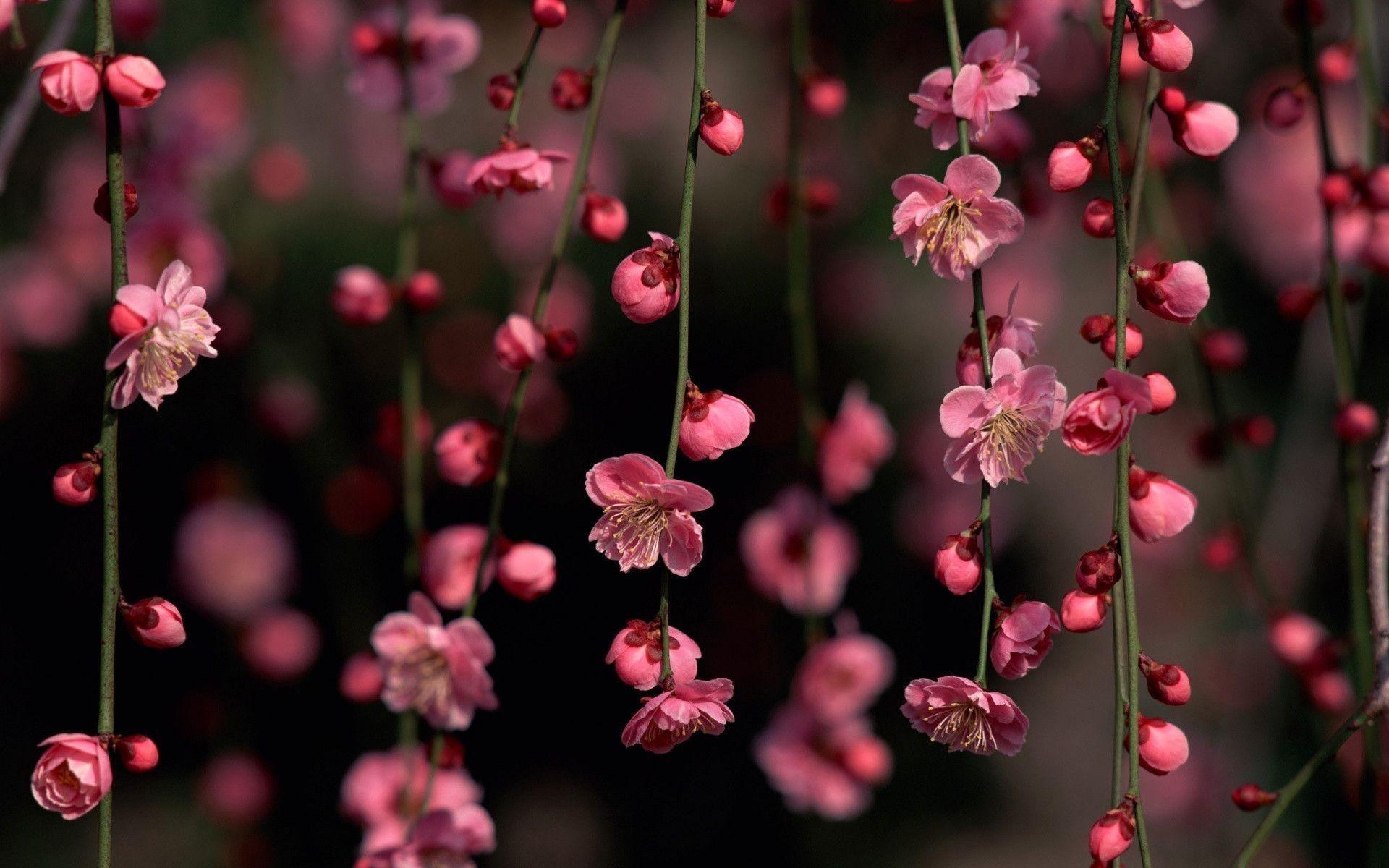 Floral Aesthetic Desktop Wallpapers Wallpaper Cave