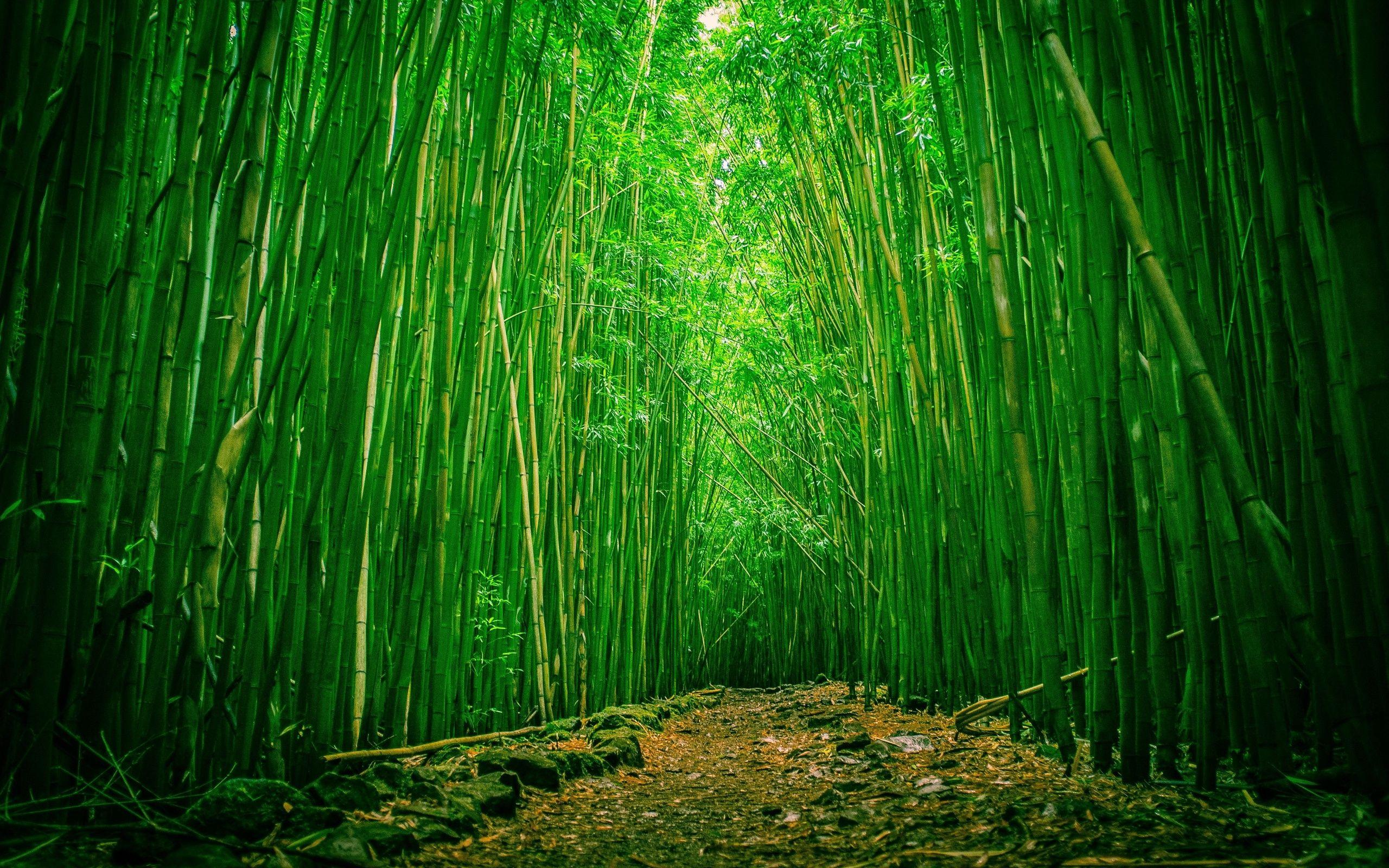Green Bamboo Forest Wallpapers Wallpaper Cave