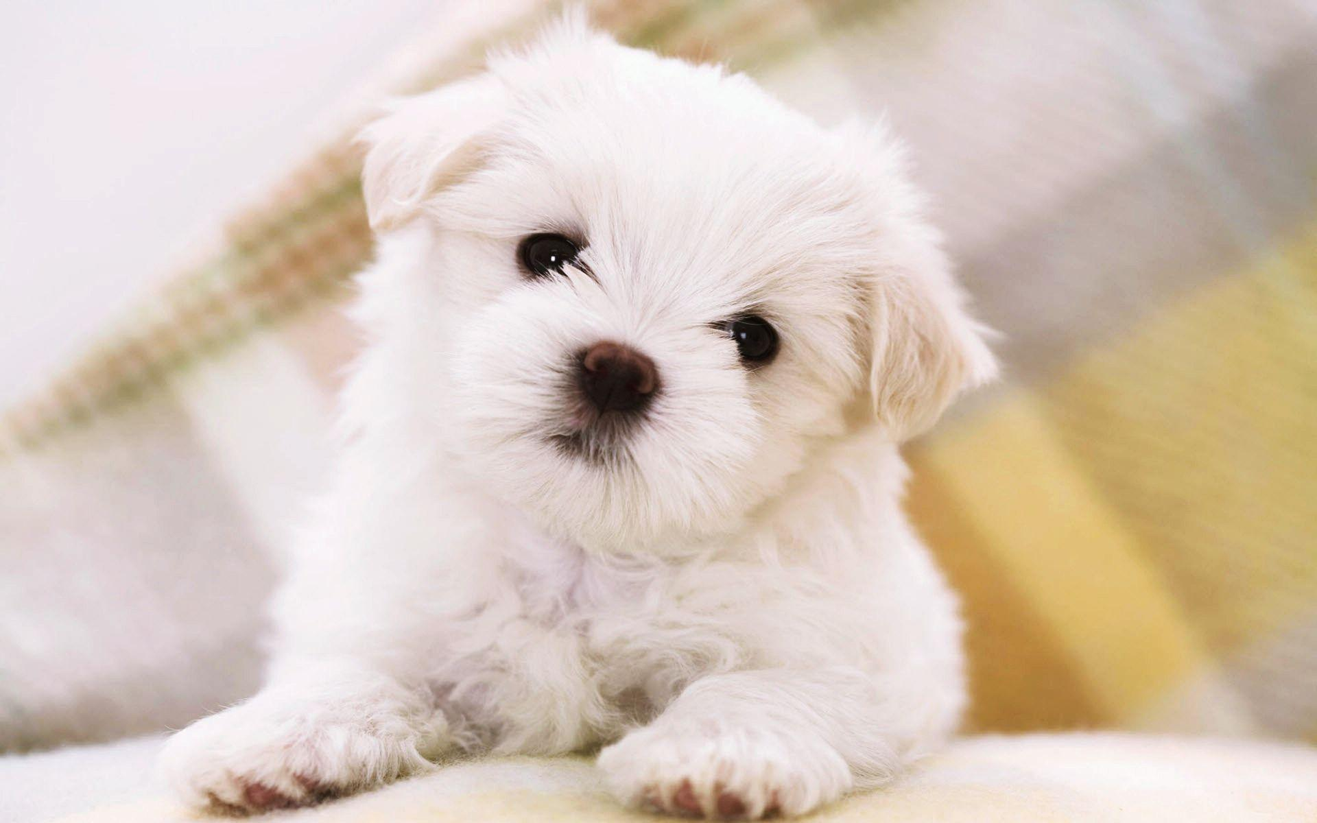 Small Cute Dogs Wallpapers Wallpaper Cave