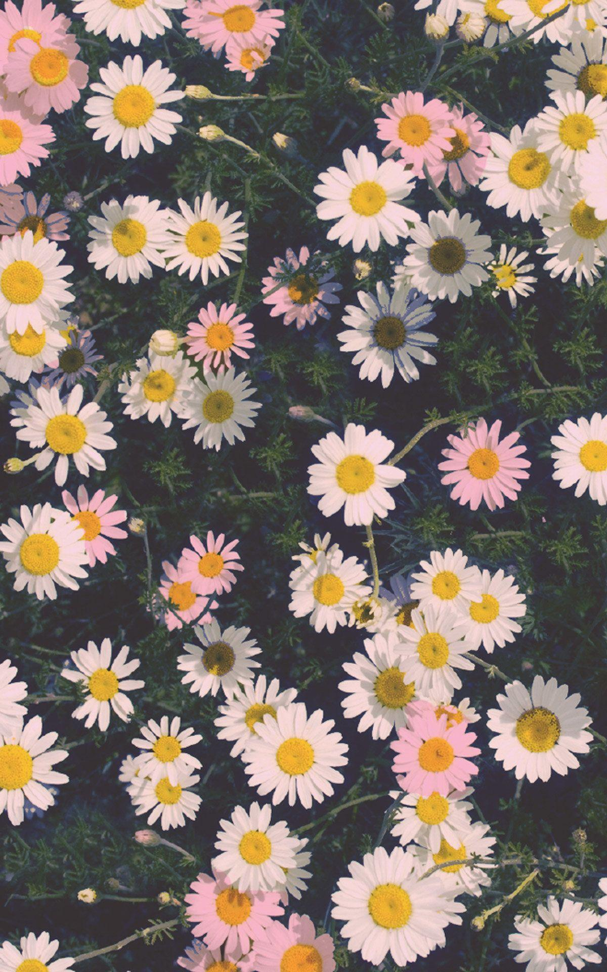 4k Flower Iphone X Wallpapers Wallpaper Cave