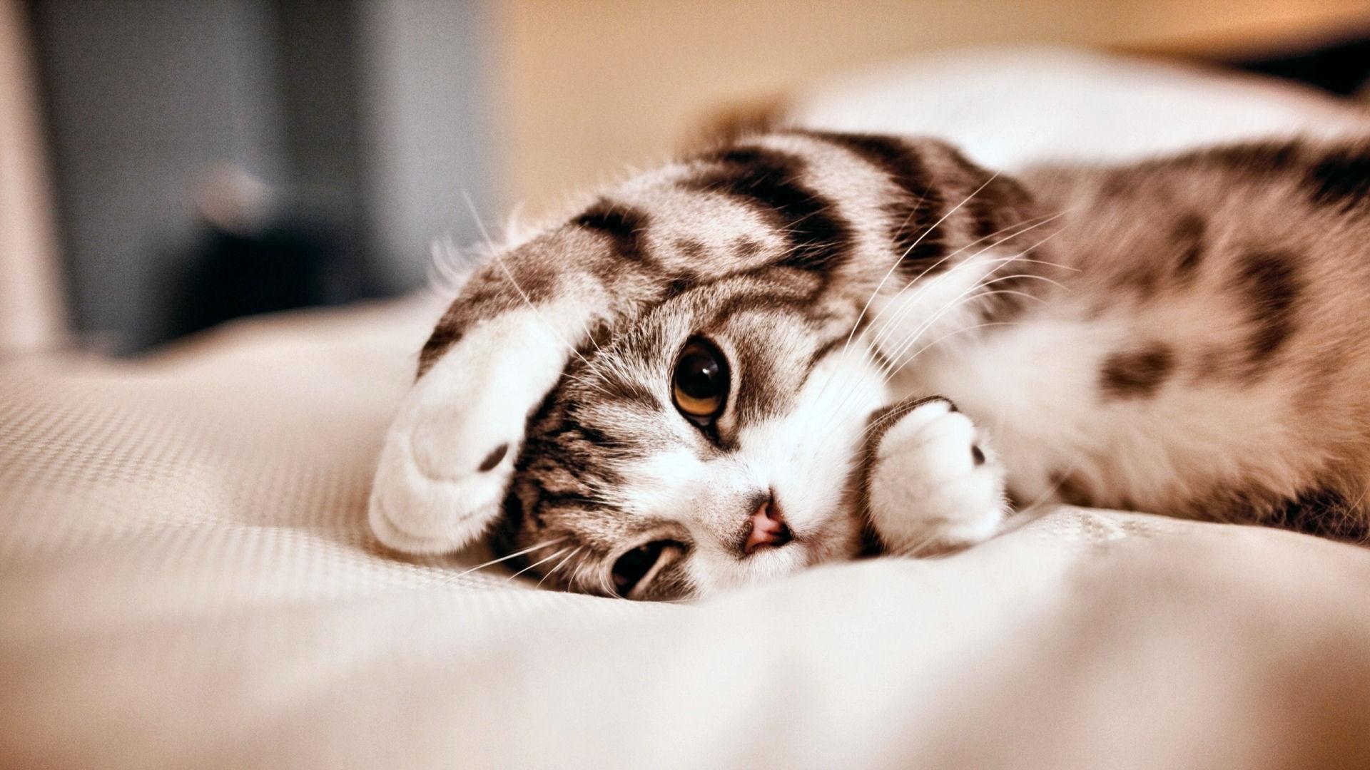 Pet Cat Wallpapers - Wallpaper Cave