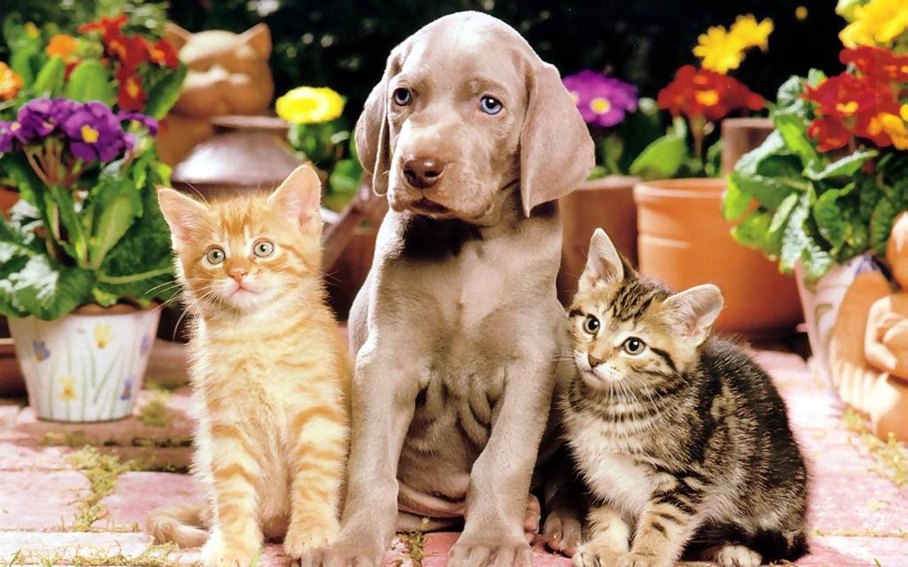 Puppy With Cats Wallpapers Wallpaper Cave