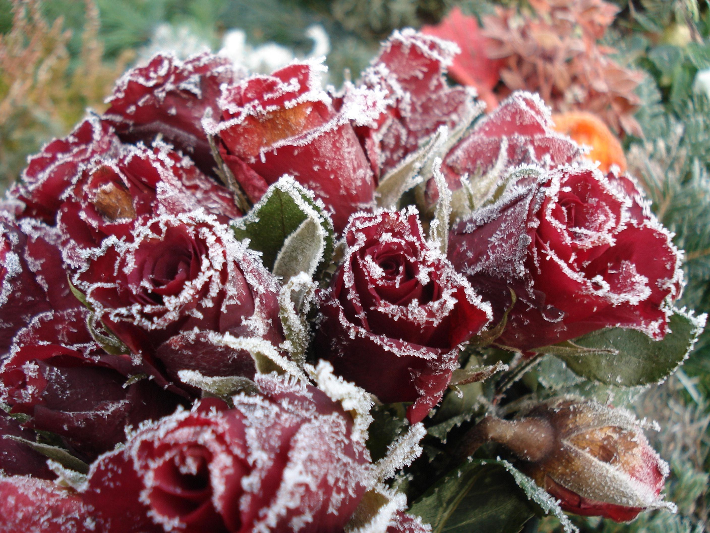 снимки цветы фото красивые букеты на снегу оттуда снимки