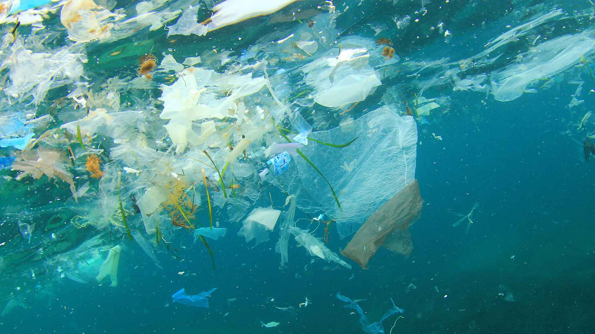 Reducing plastic pollution in our oceans – World Environment