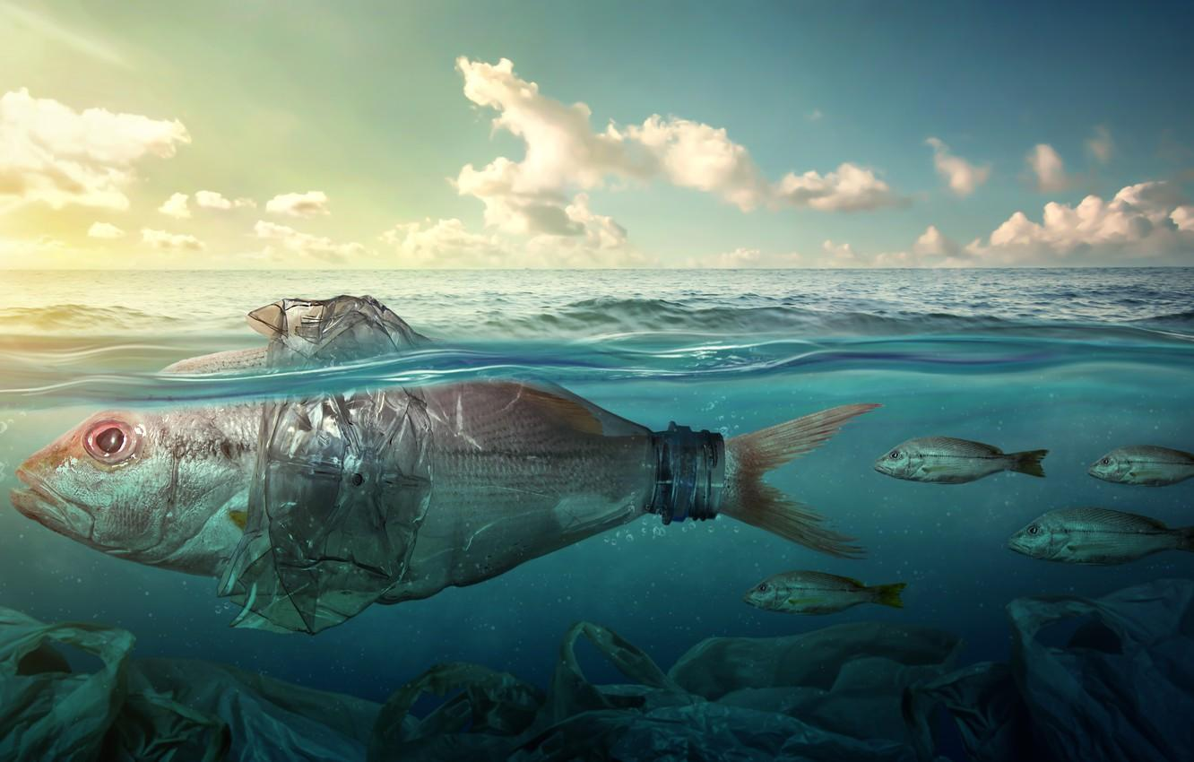 Wallpapers sea, fish, garbage, the ocean, bottle, pollution