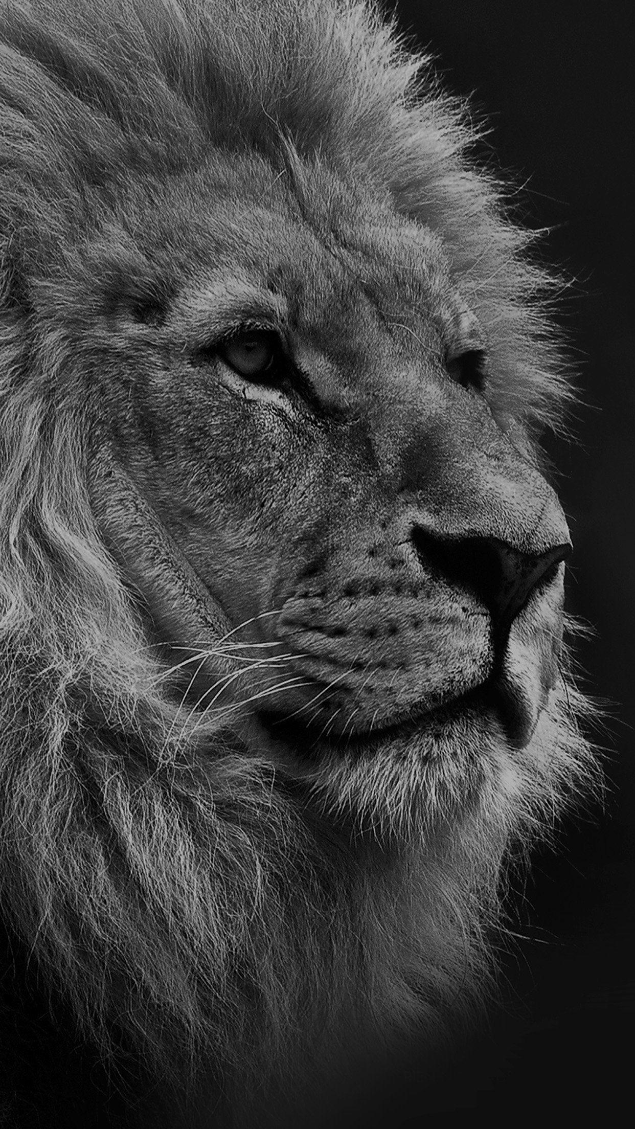 Black Lion Iphone Wallpapers Wallpaper Cave