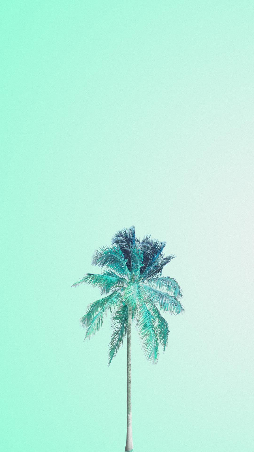 31 Background Warna Hijau Tosca Rudi Gambar
