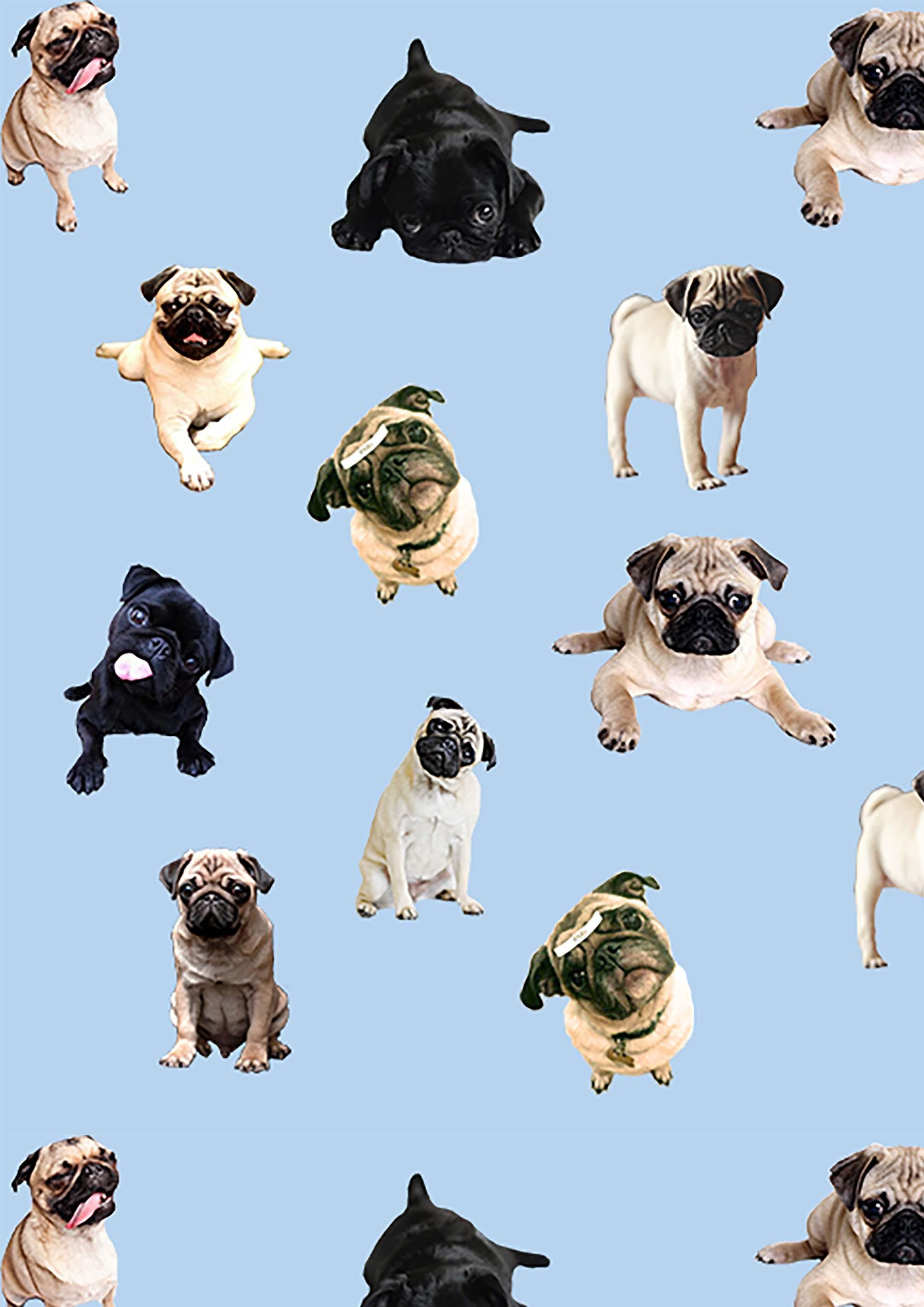 Cute Pug Iphone Wallpapers Wallpaper Cave