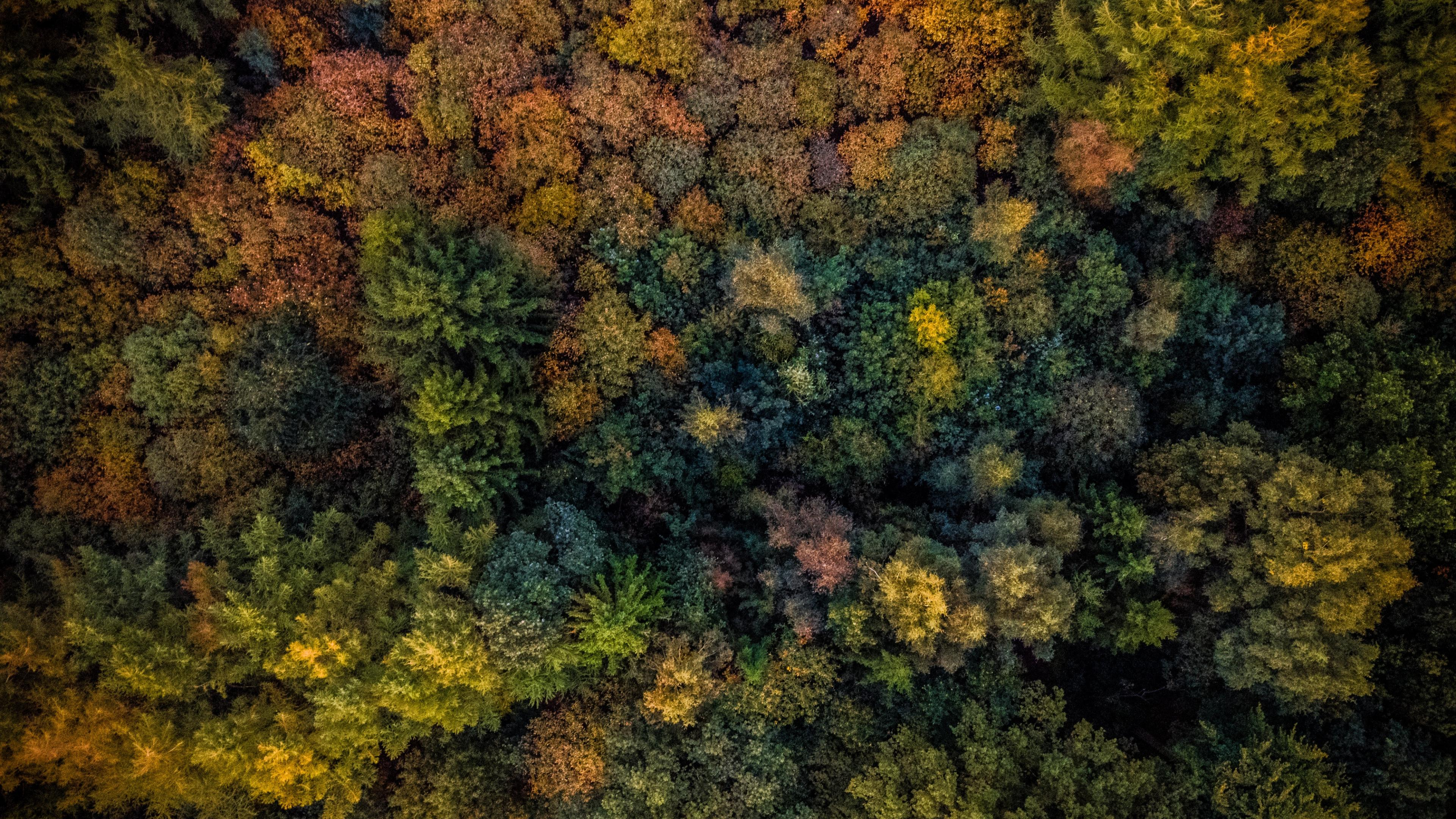 Forest Aerial View 4k Wallpapers Wallpaper Cave