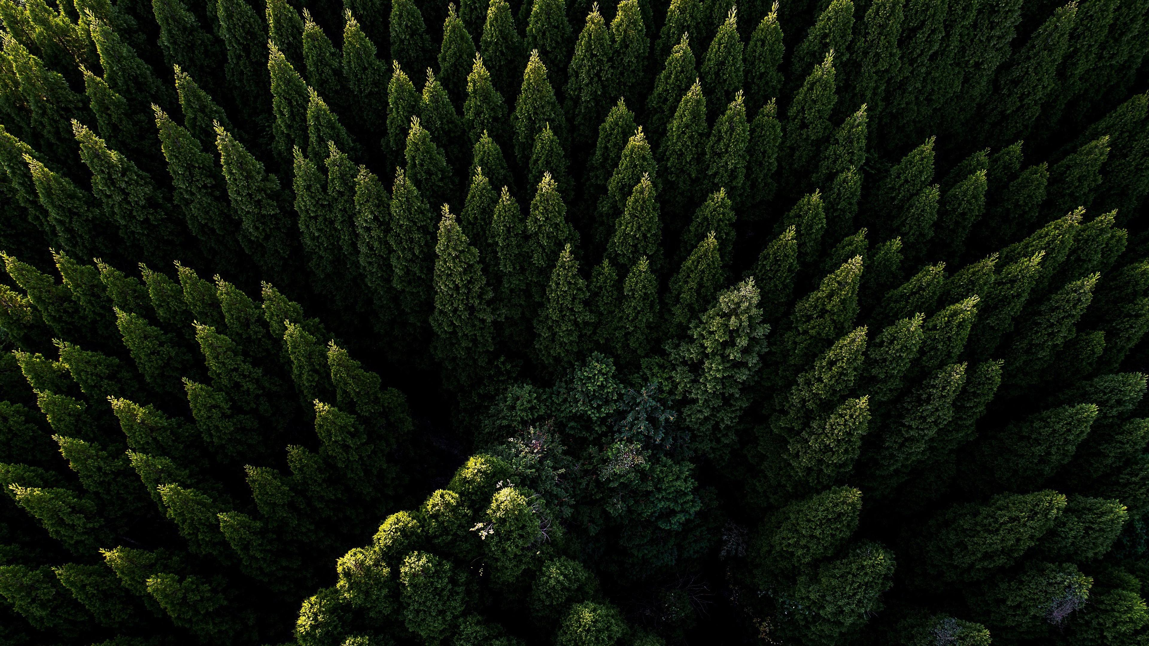 Forest Aerial View 4k Wallpapers - Wallpaper Cave