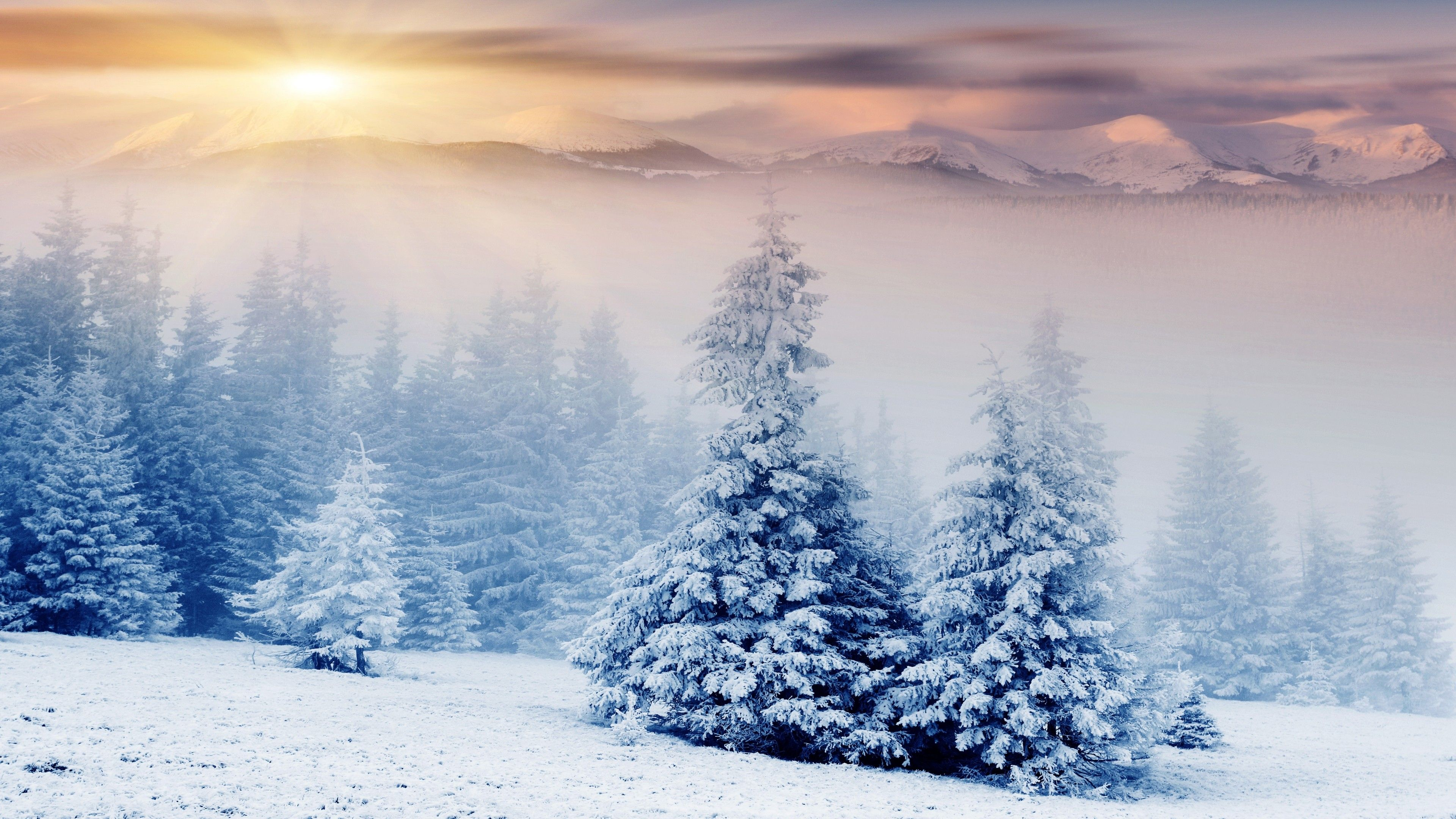Christmas Trees Snow Wallpapers Wallpaper Cave