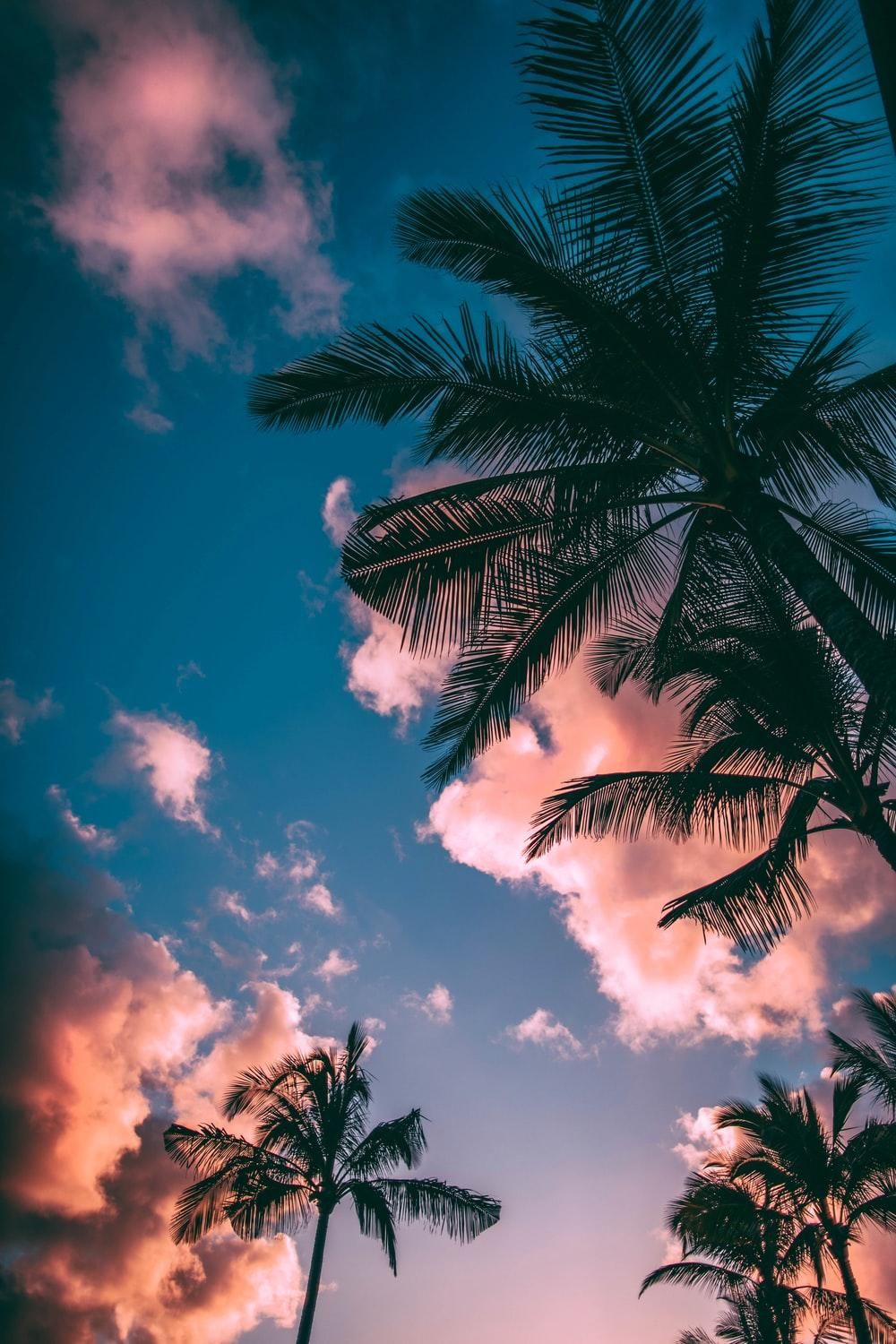 Summer Wallpapers: Free HD Download [500+ HQ]