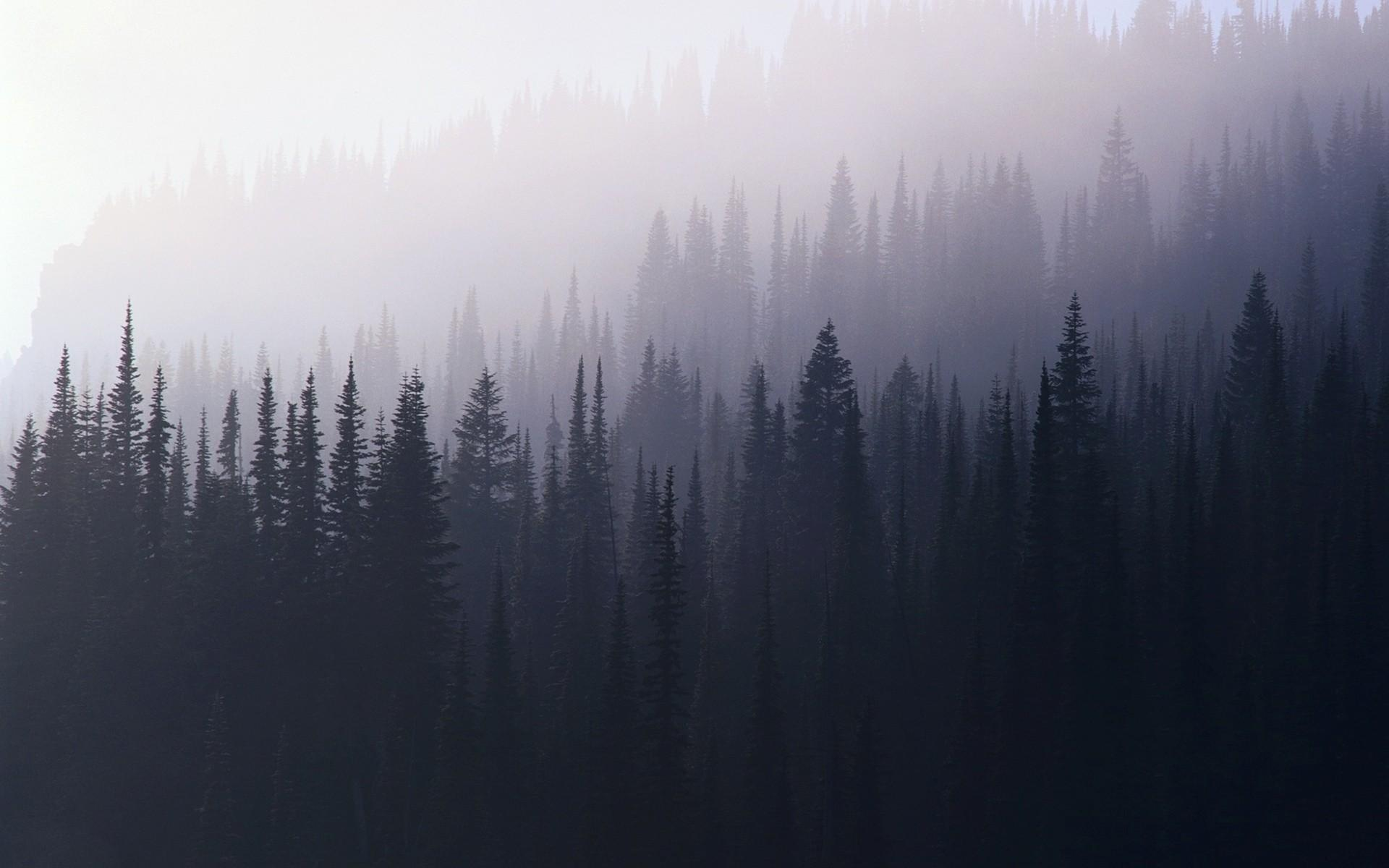 Misty Forest 4k Wallpapers Wallpaper Cave