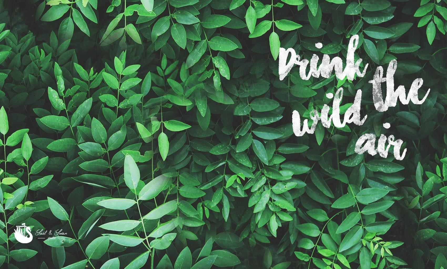 Green Leaf Aesthetic Wallpapers Wallpaper Cave